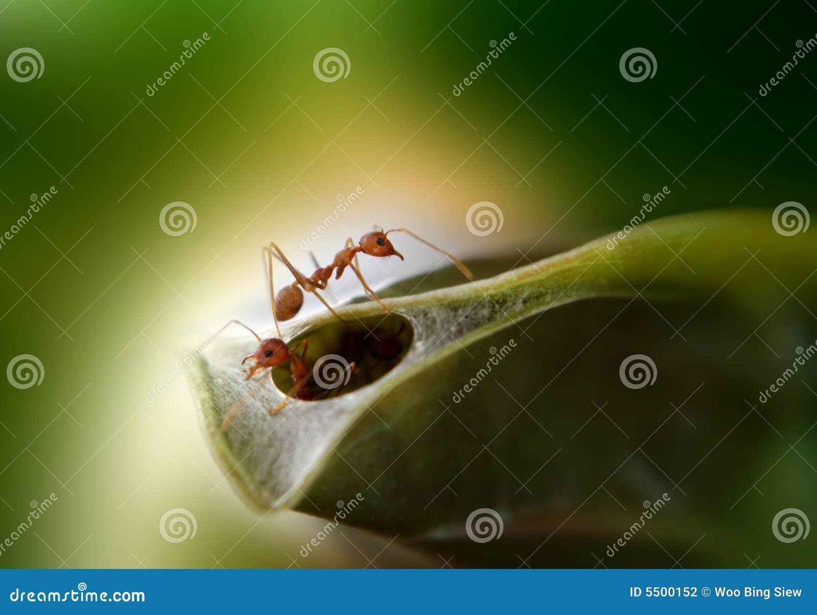 Het nest van mieren