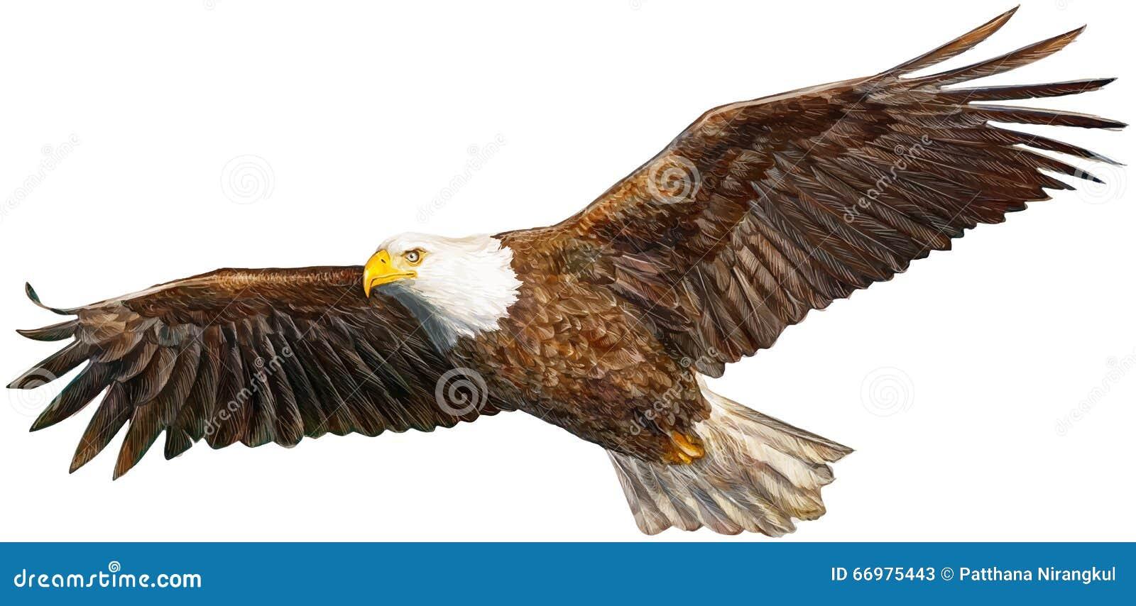 Het nieuwe adelaar vliegen