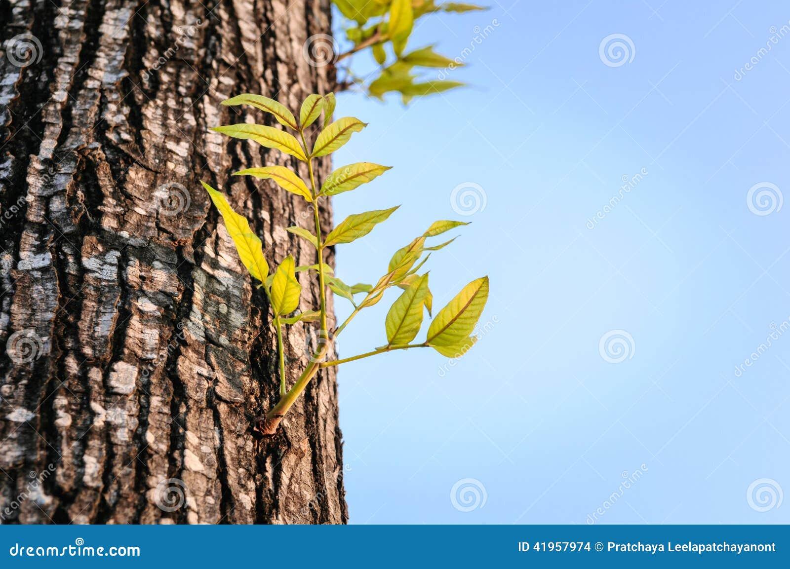 Het nieuwe het leven groeien op het oude hout