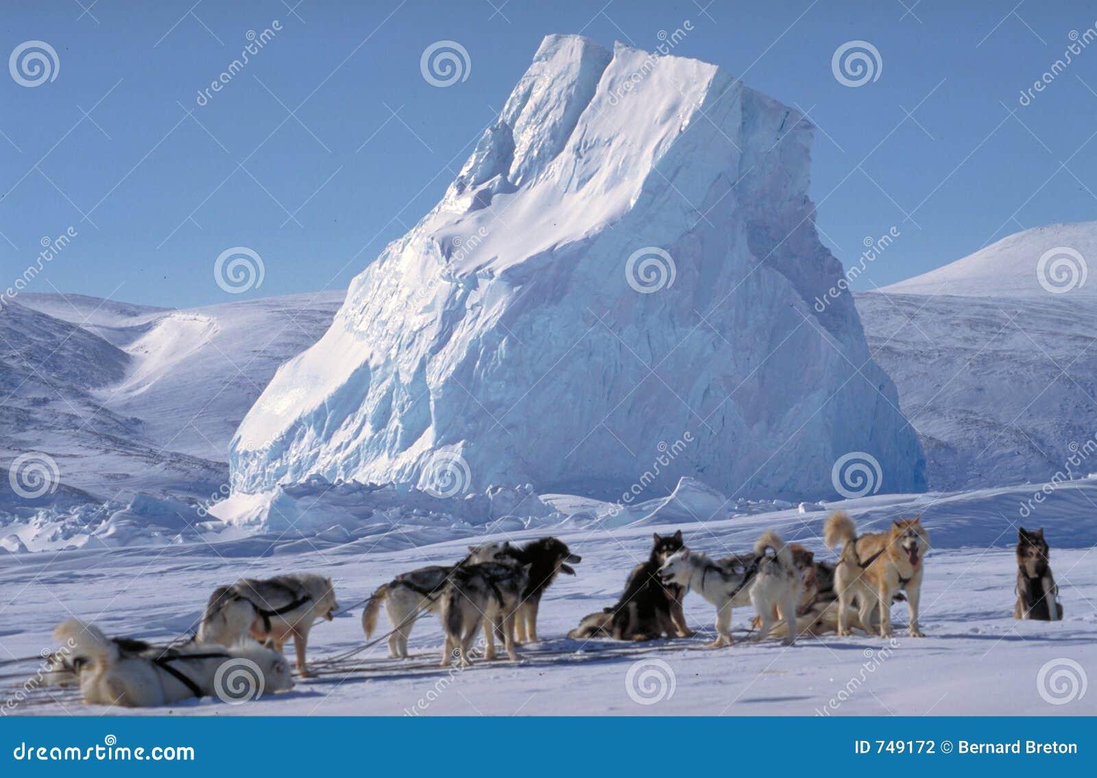 Het noordpoolgebied, Baffin eiland