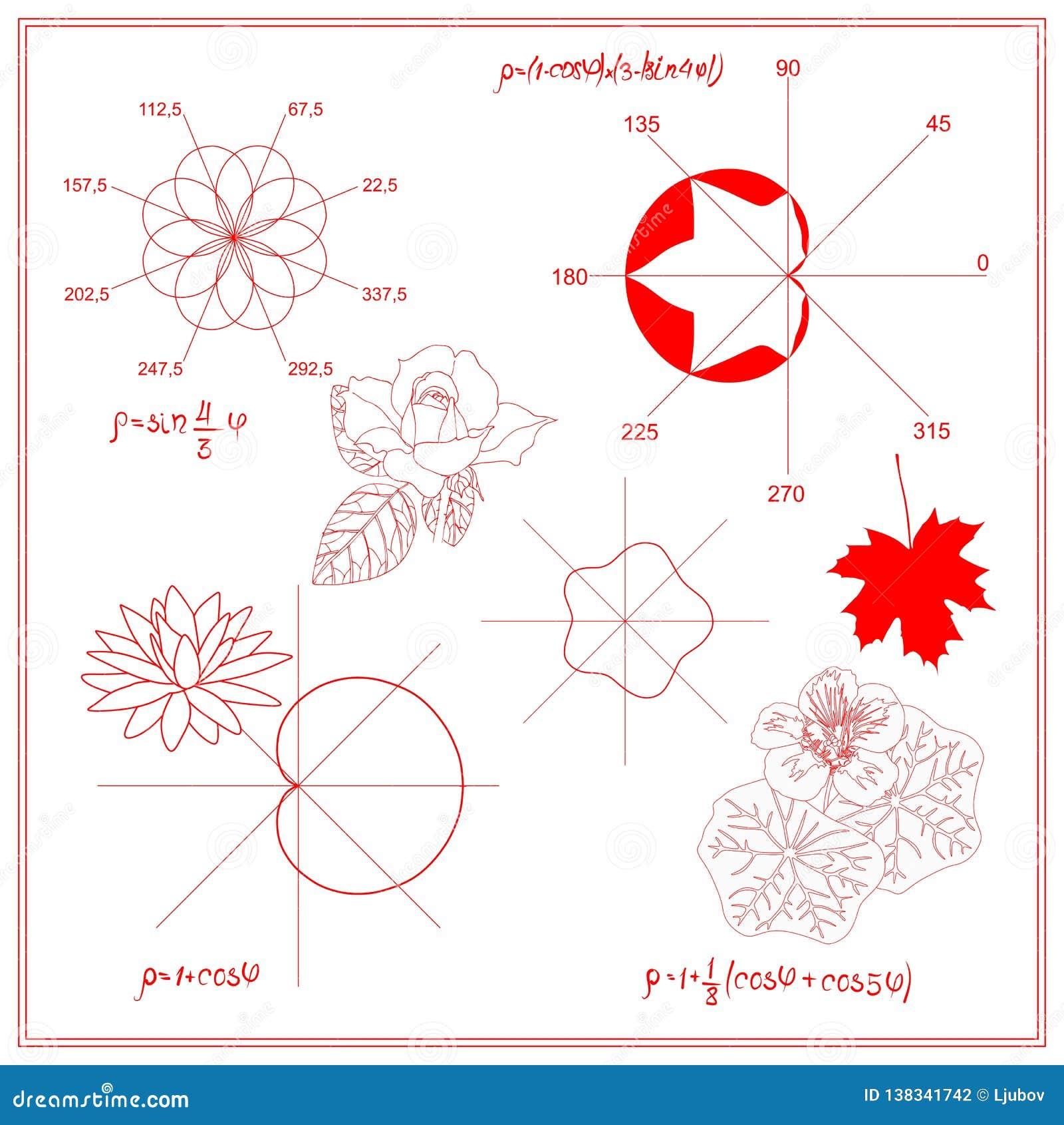 Het onderhouden Wiskunde De trigonometrische functies en de algebraïsche grafieken van waterlelieblad, esdoorn en Oostindische ke