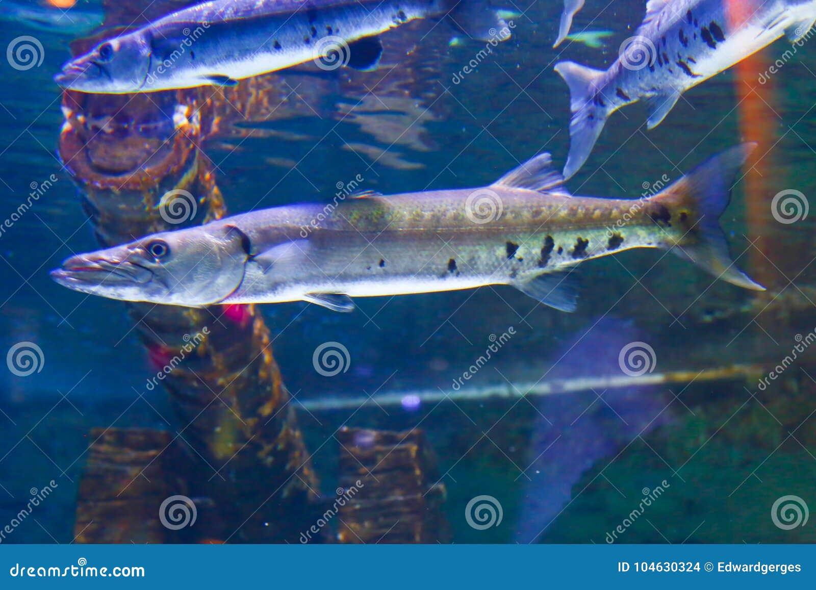 Download Het Onderwaterleven In Doubai Stock Foto - Afbeelding bestaande uit overzees, aquatisch: 104630324