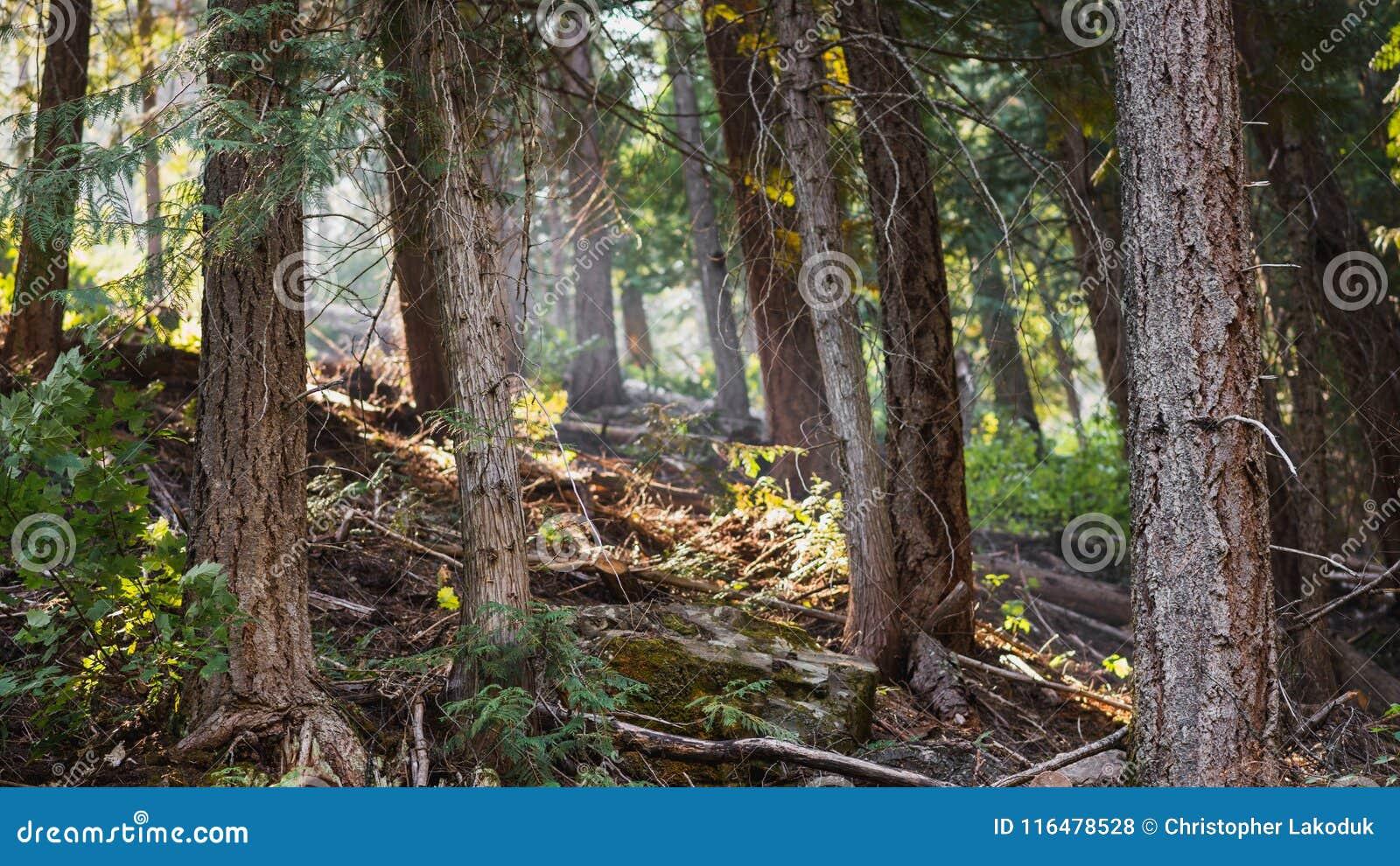 Het onderzoeken van het Bos