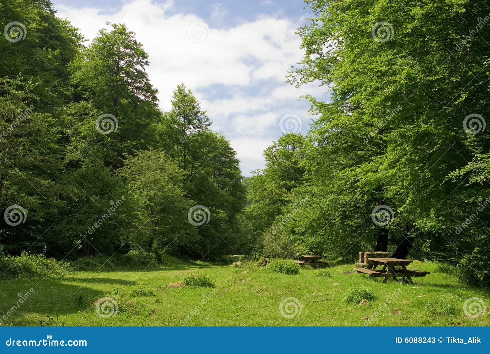 Het ontruimen in bos