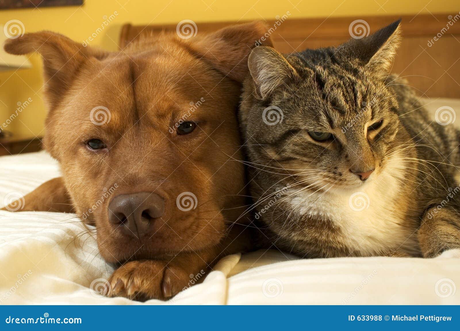Het ontspannen van de hond en van de kat