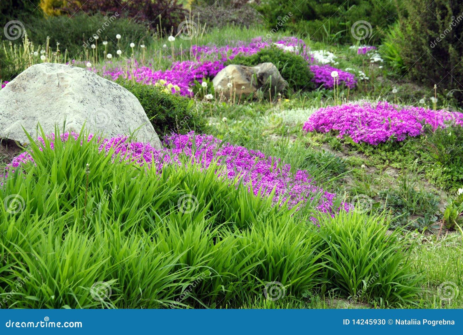 Het ontwerp van de tuin met rotsen en bloemen 5 stock foto afbeelding 14245930 - Ontwerp van de tuin ...