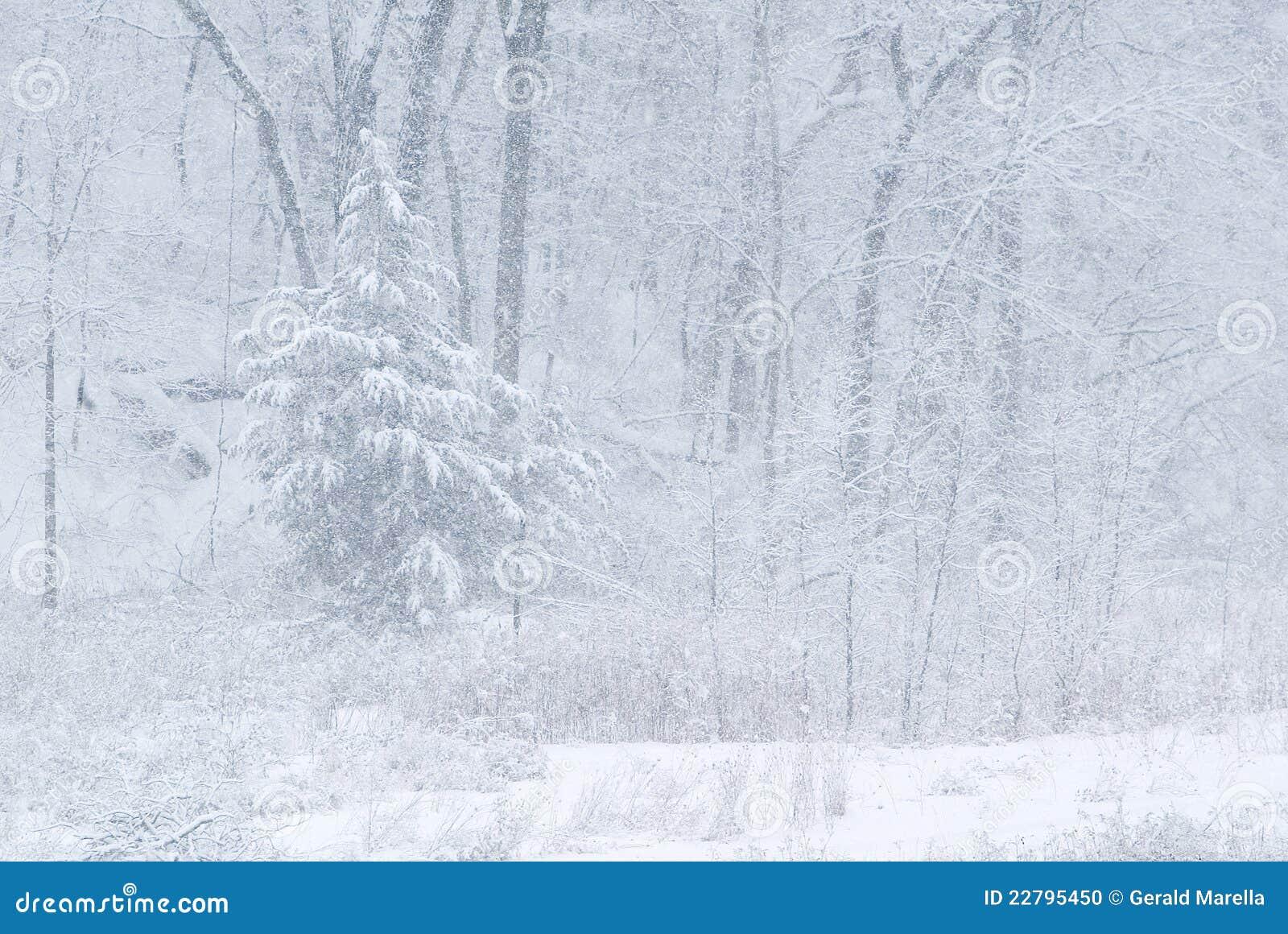 Het onweer en het bos van de sneeuw