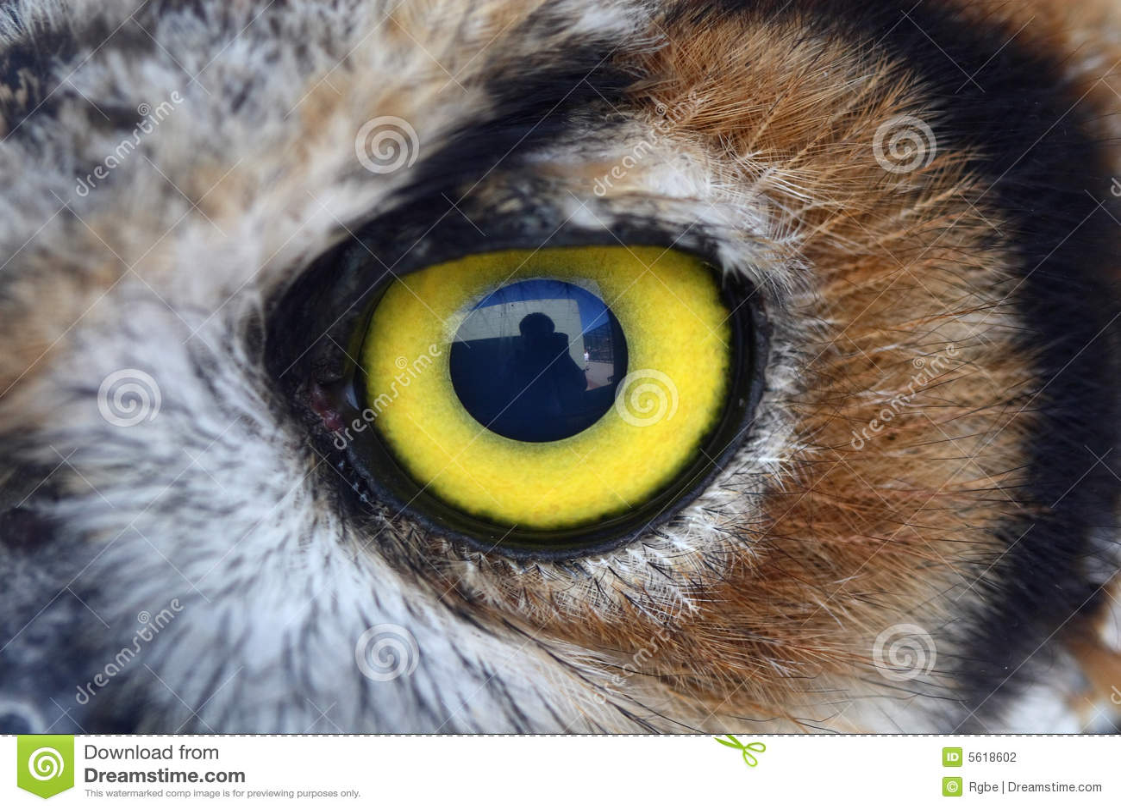Het oog van de uil