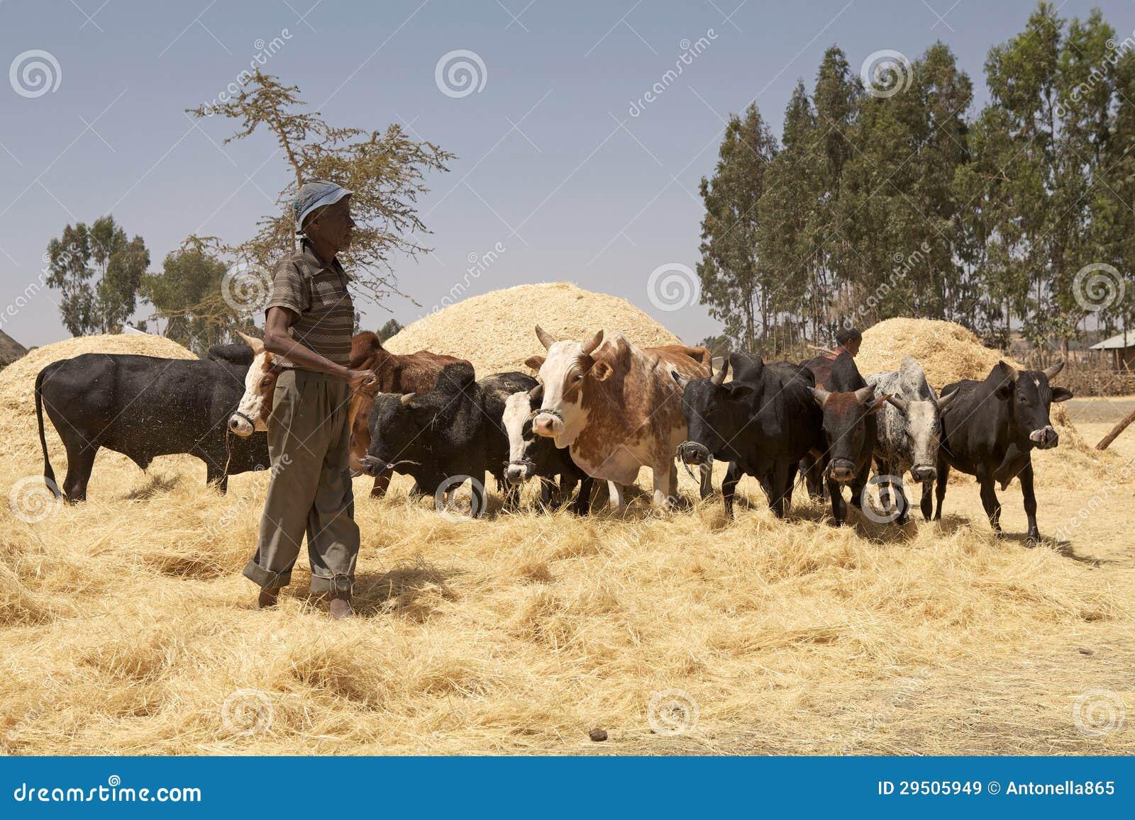Het oogsten van Afrika