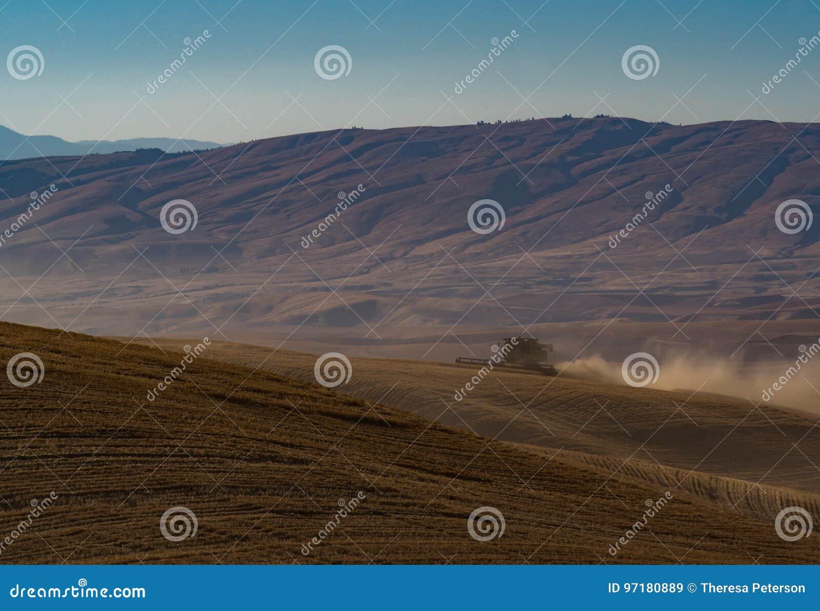 Het oogsten van Tarwe in het Recente Middaglicht
