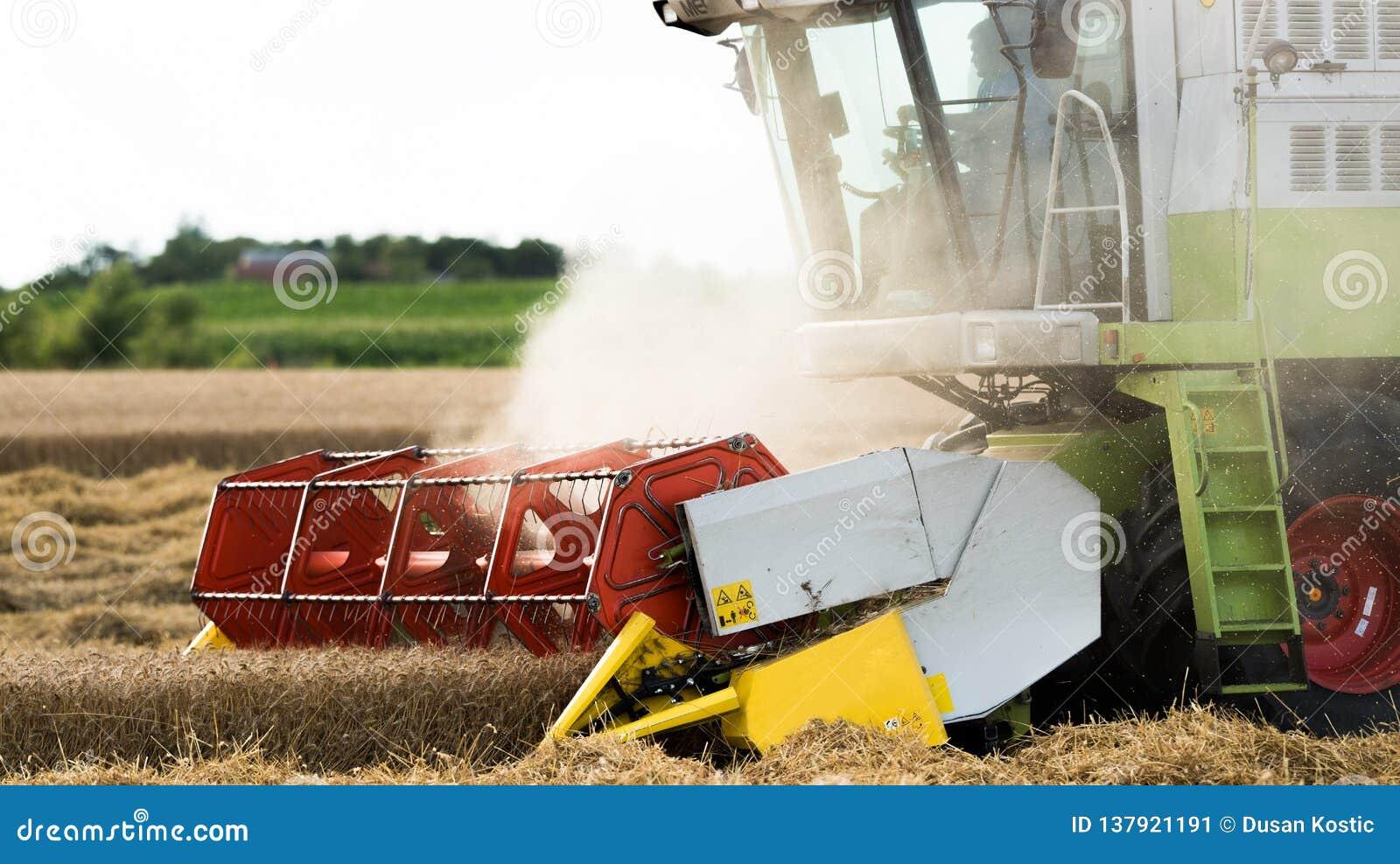 Het oogsten van tarwegebied met combineert