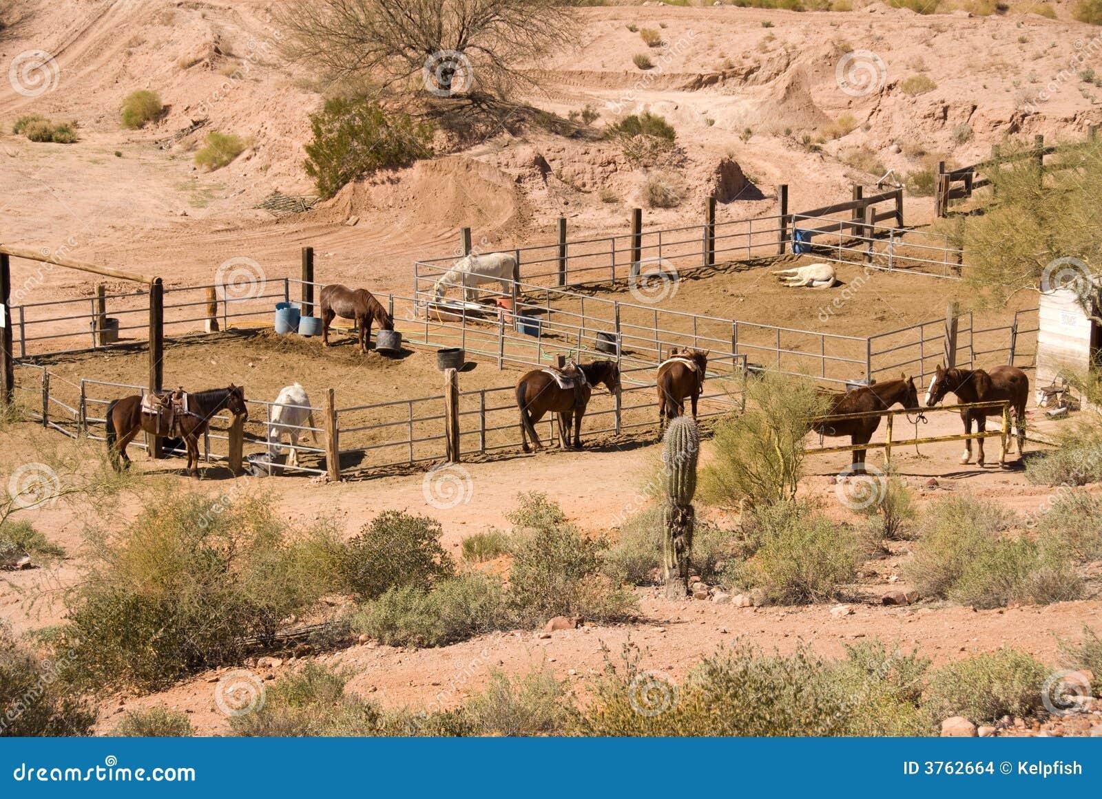 Het paard drijft bijeen