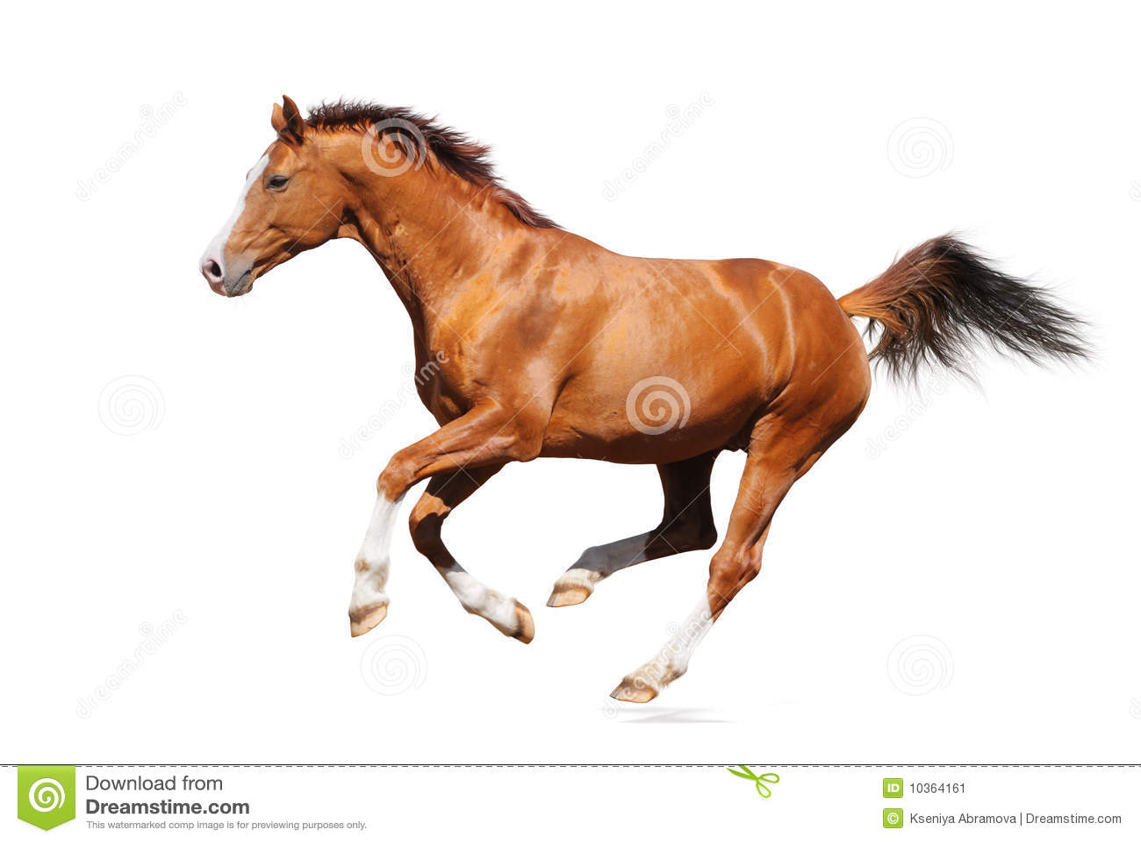 Het paard van de galop