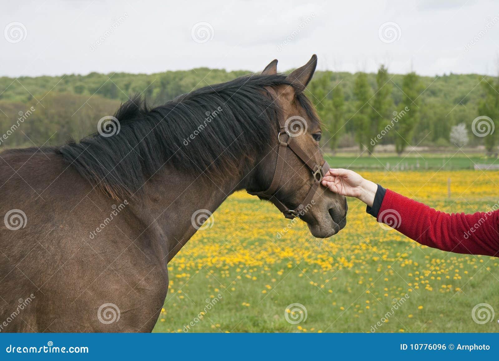 Het Paard van de Holding van de vrouw