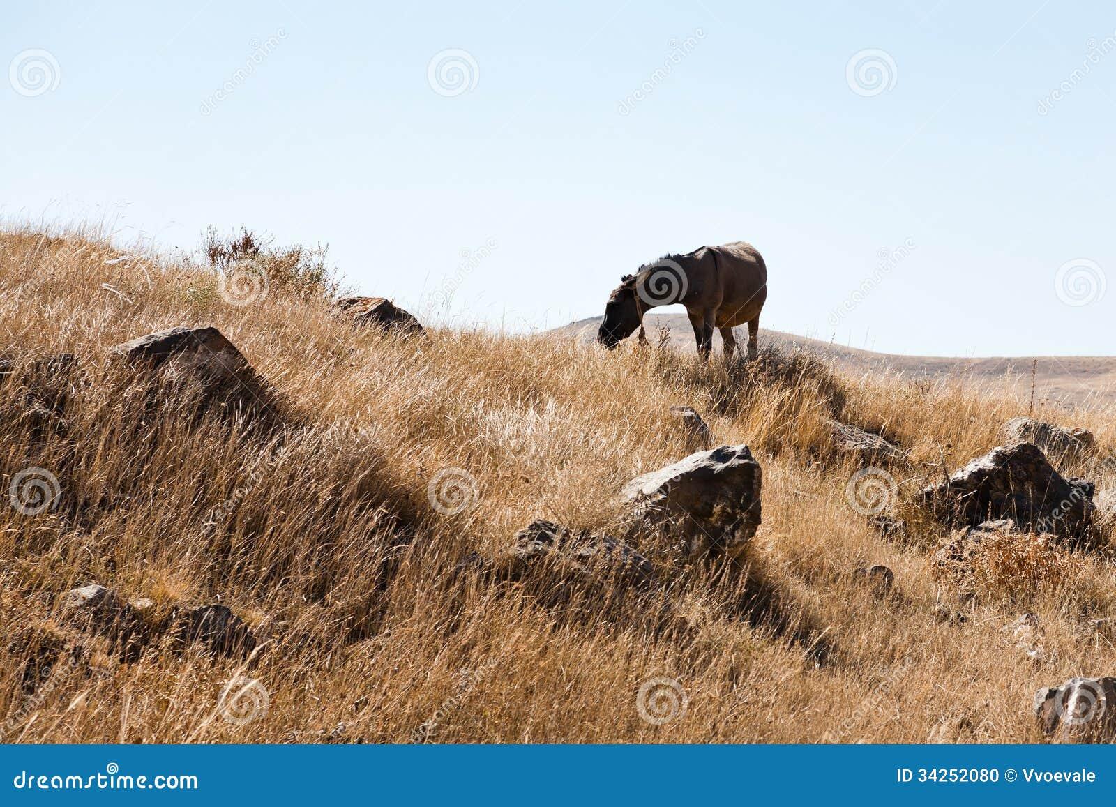 Het paard weidt in Zorats Karer in Armenië