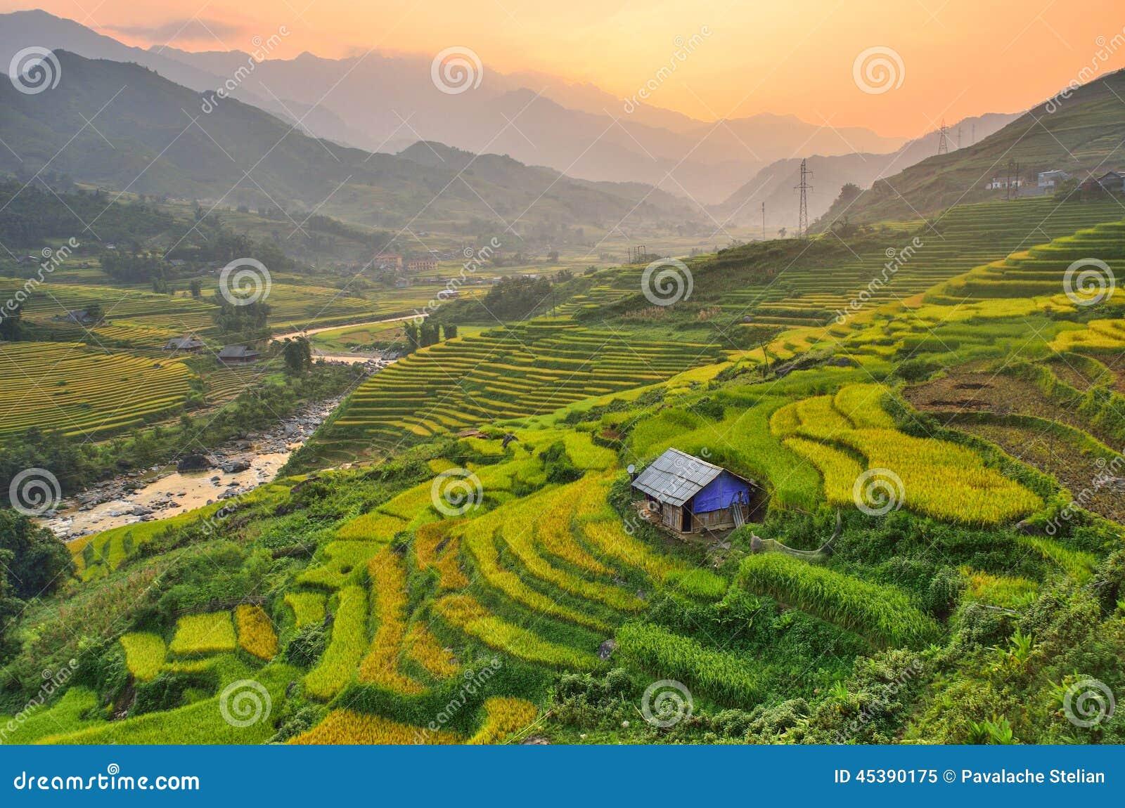 Het padieveldgebied van Vietnam