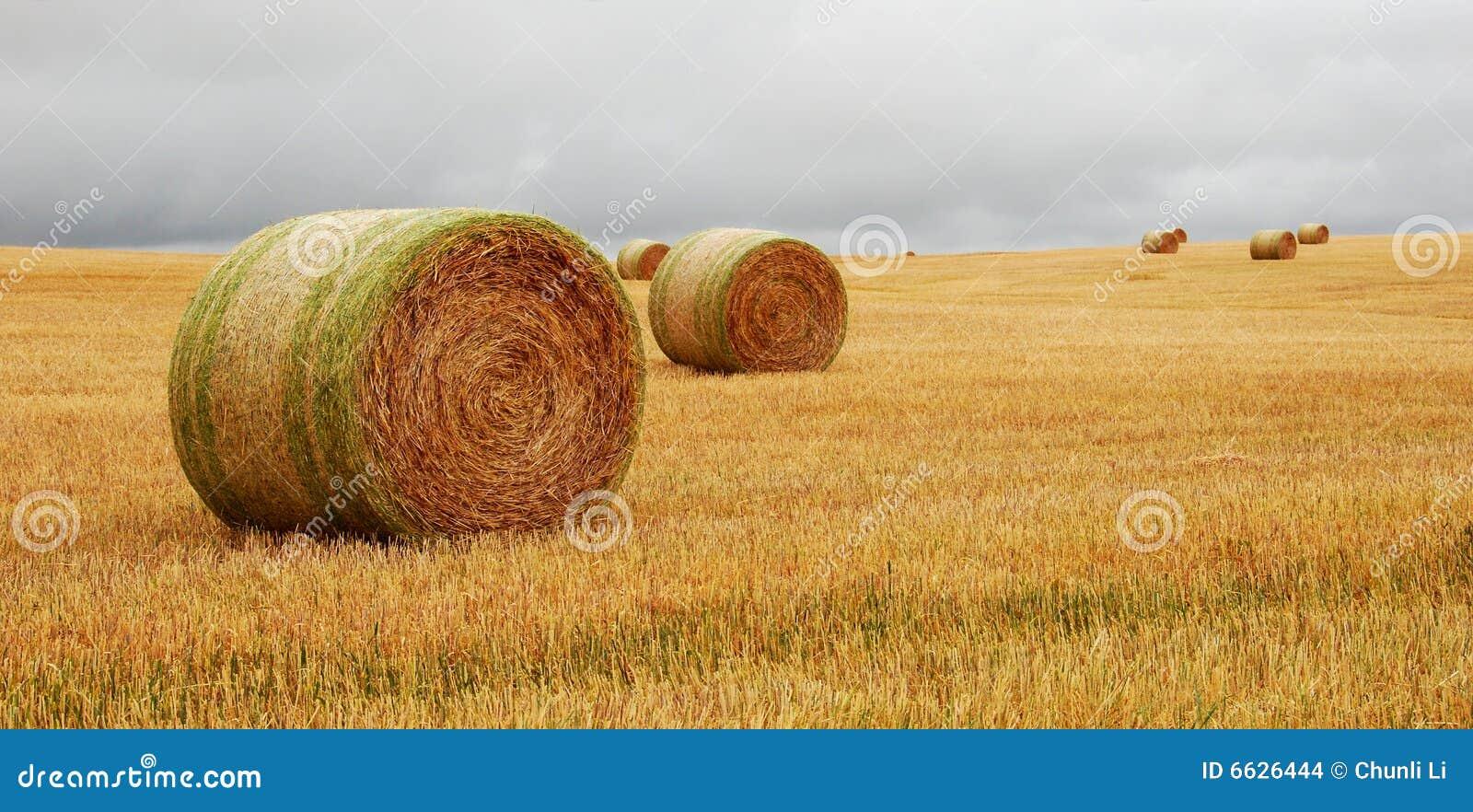 Het pak van de tarwe