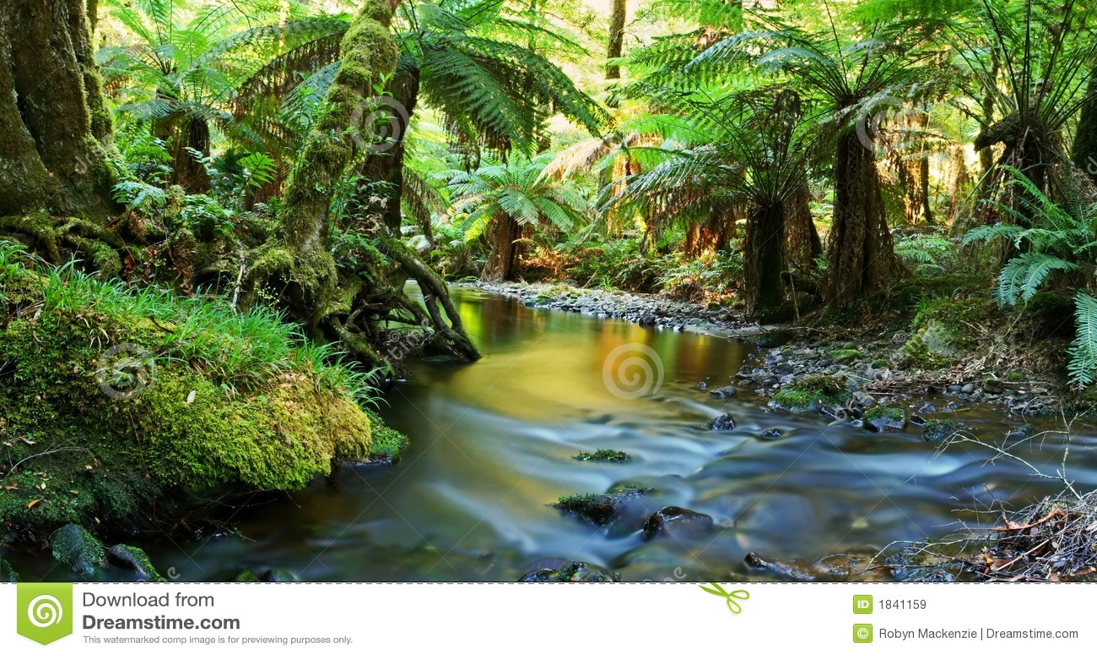 Het Panorama van de Rivier van het regenwoud