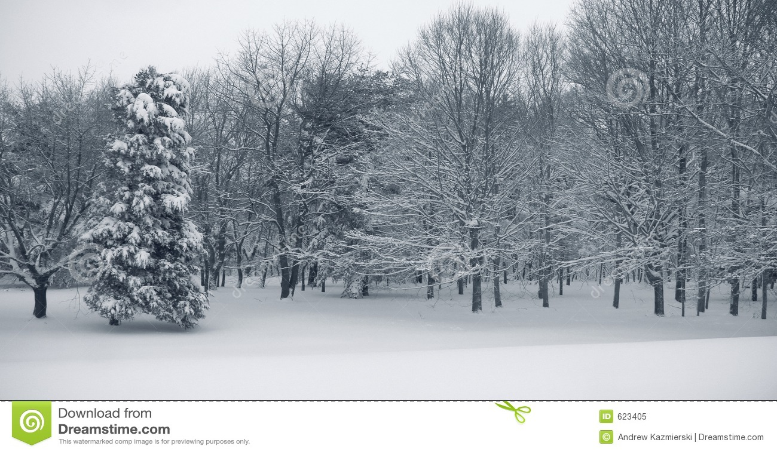 Het Panorama van de sneeuw