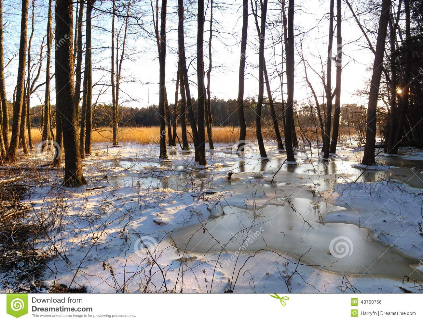 Het panorama van het de winterlandschap