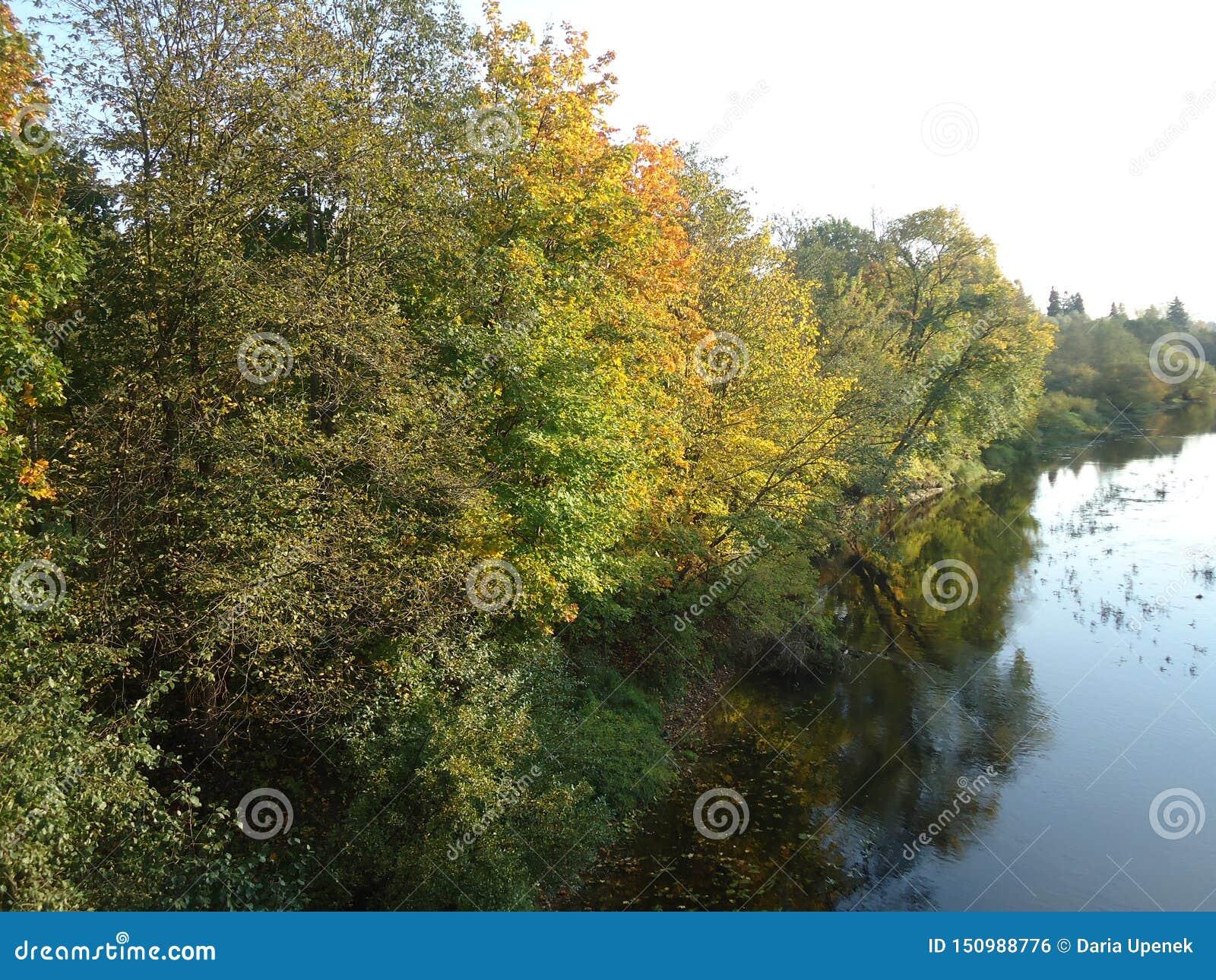 Het park boswater van de boomrivier