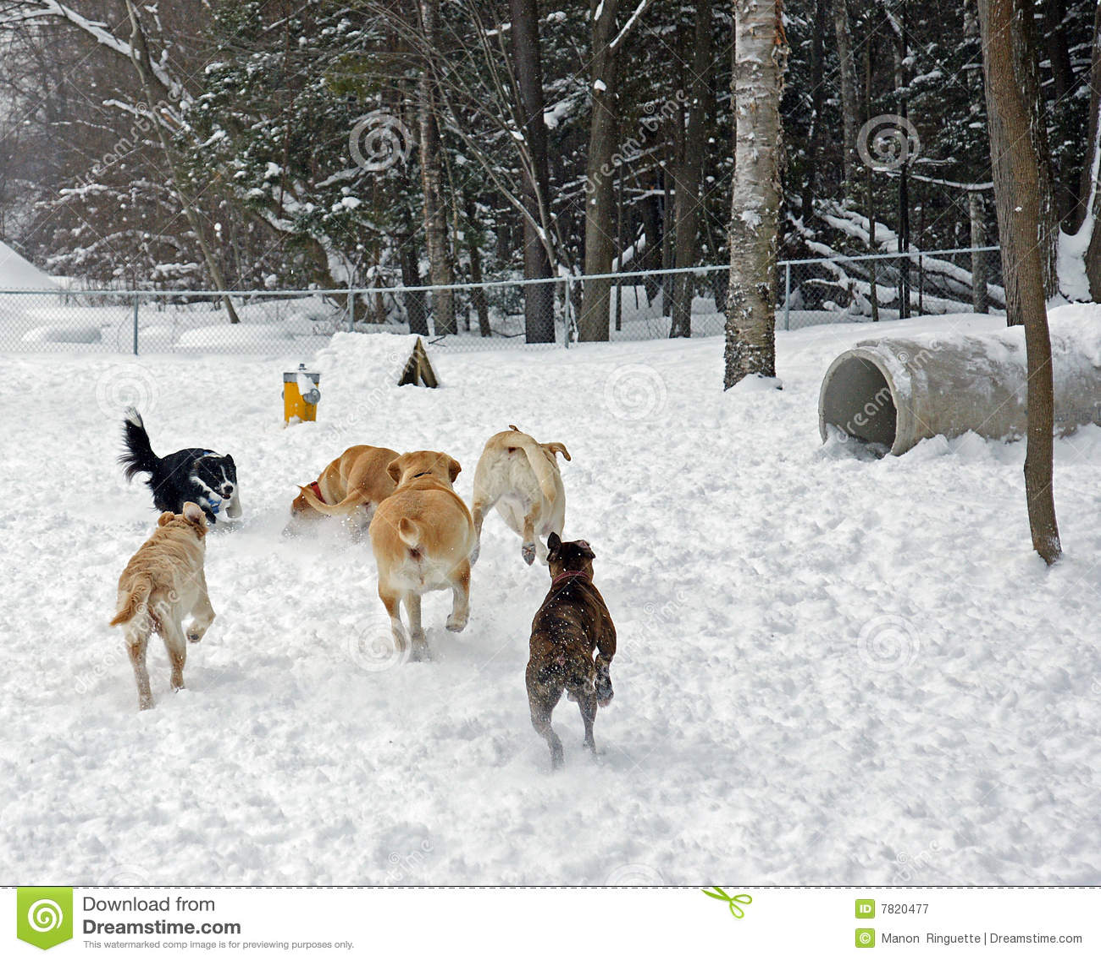 Het park van de Hond