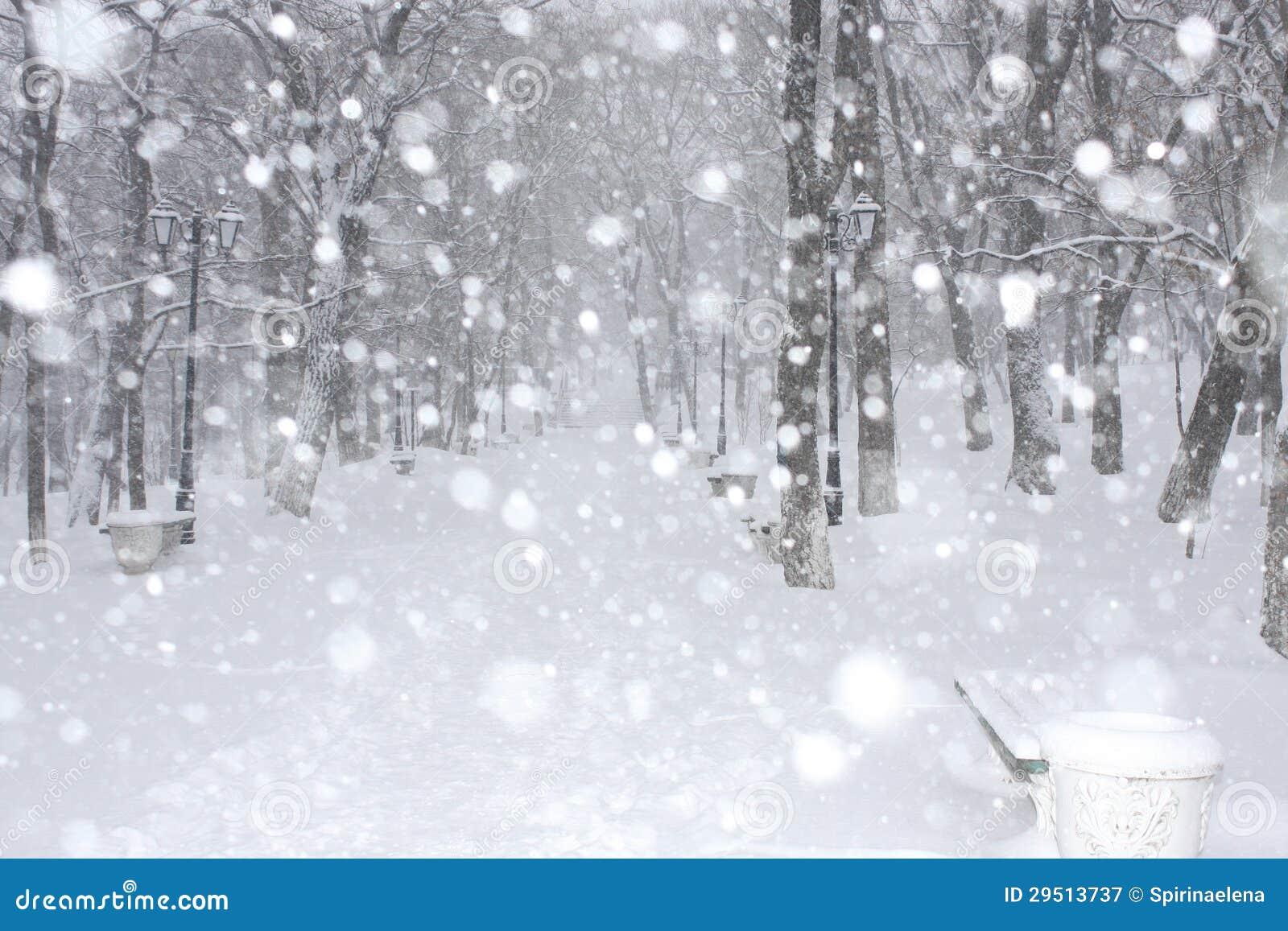 Het park van de winter