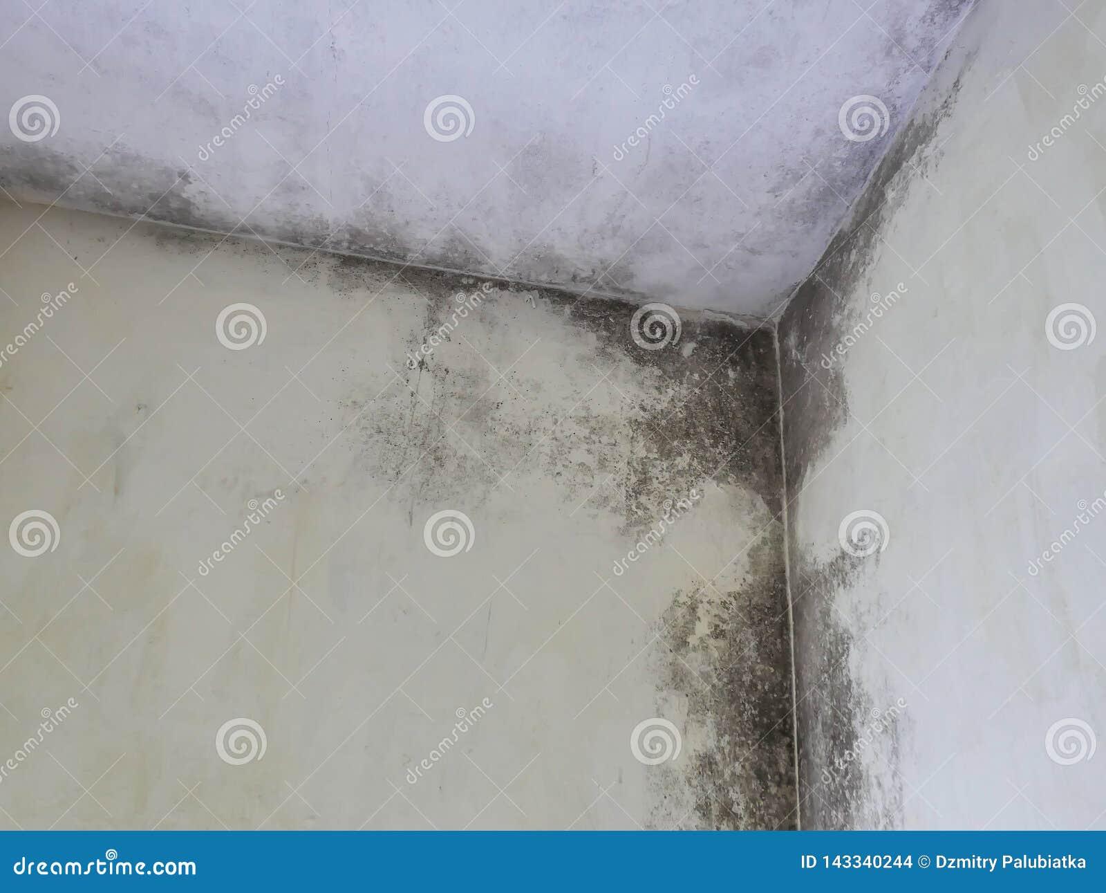 Het plafond is behandeld met vorm