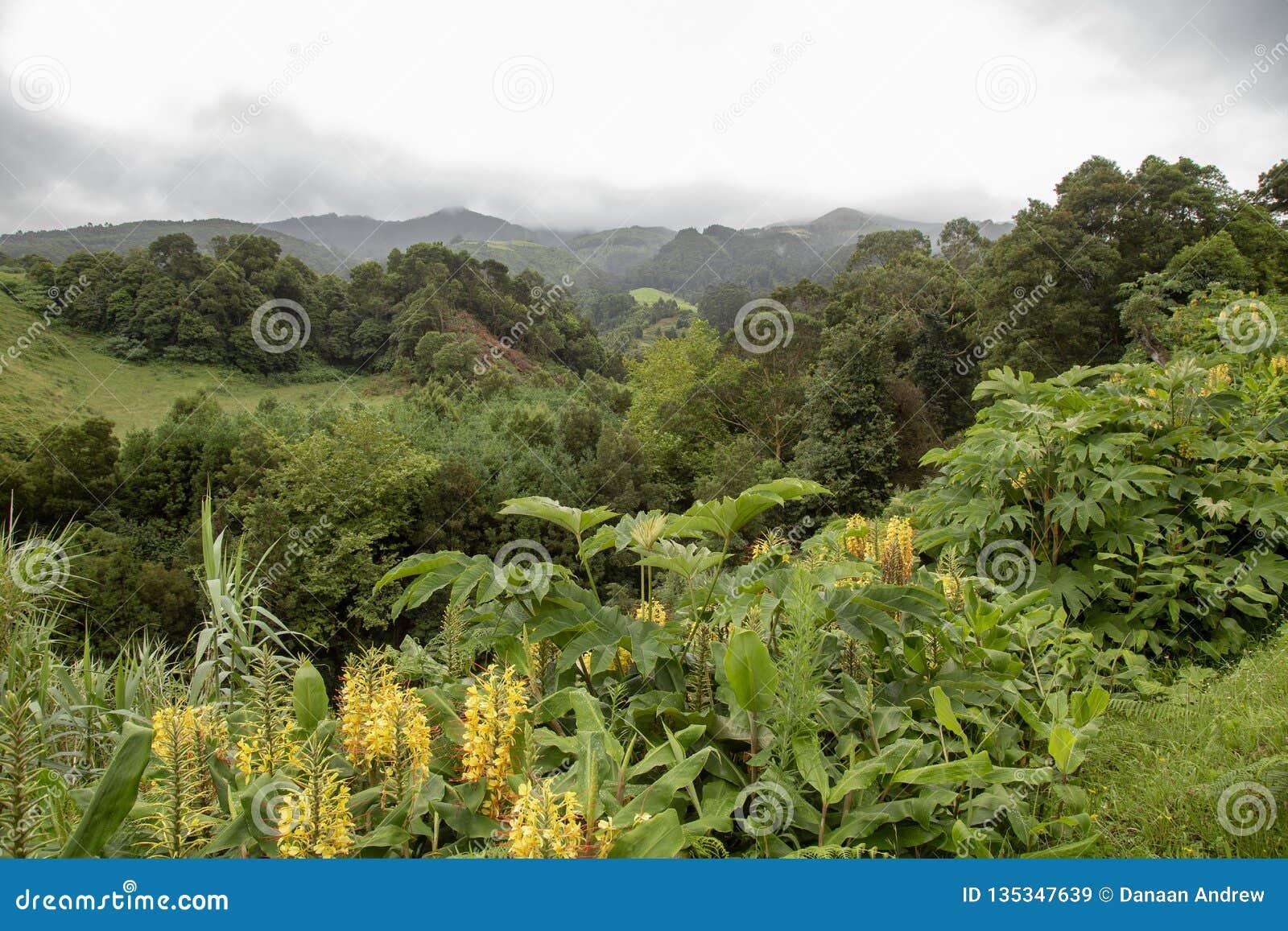 Het Platteland van de Azoren