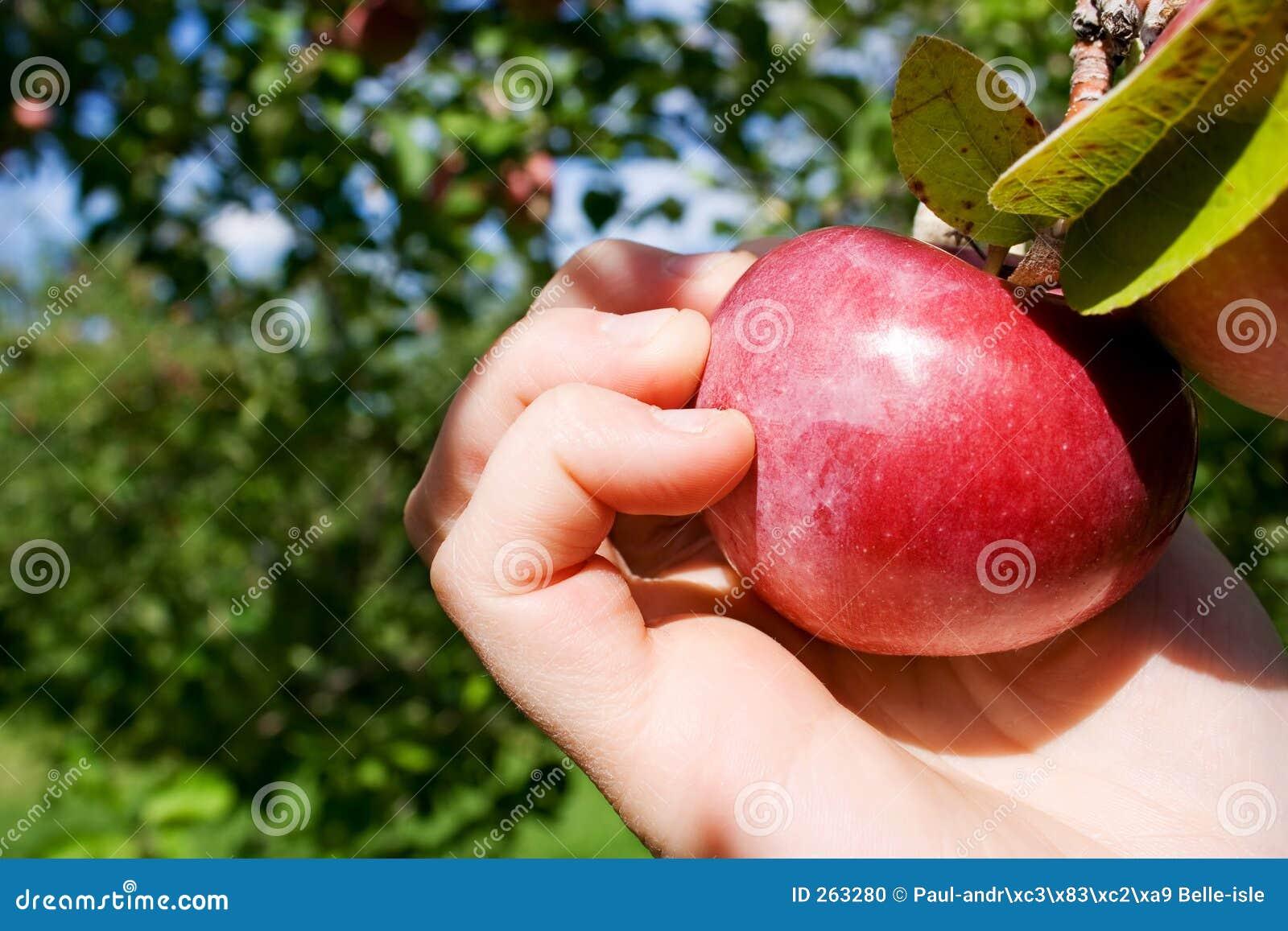 Het plukken Appel
