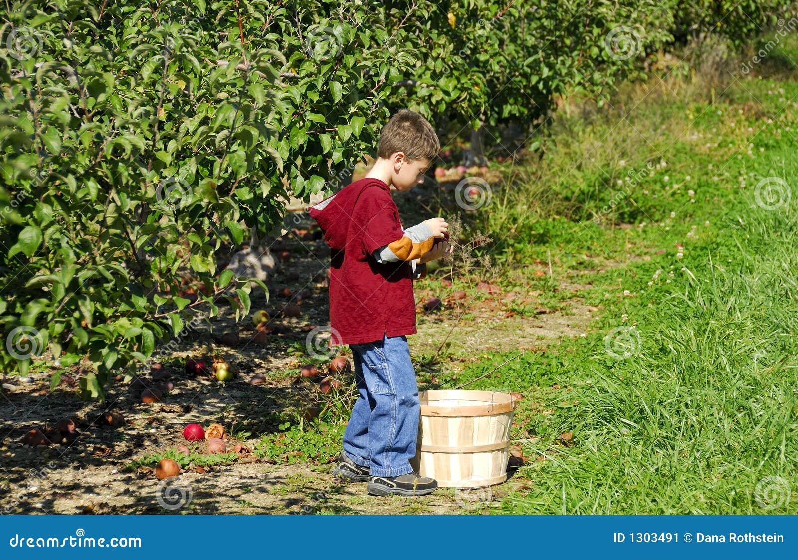 Het Plukken van de appel