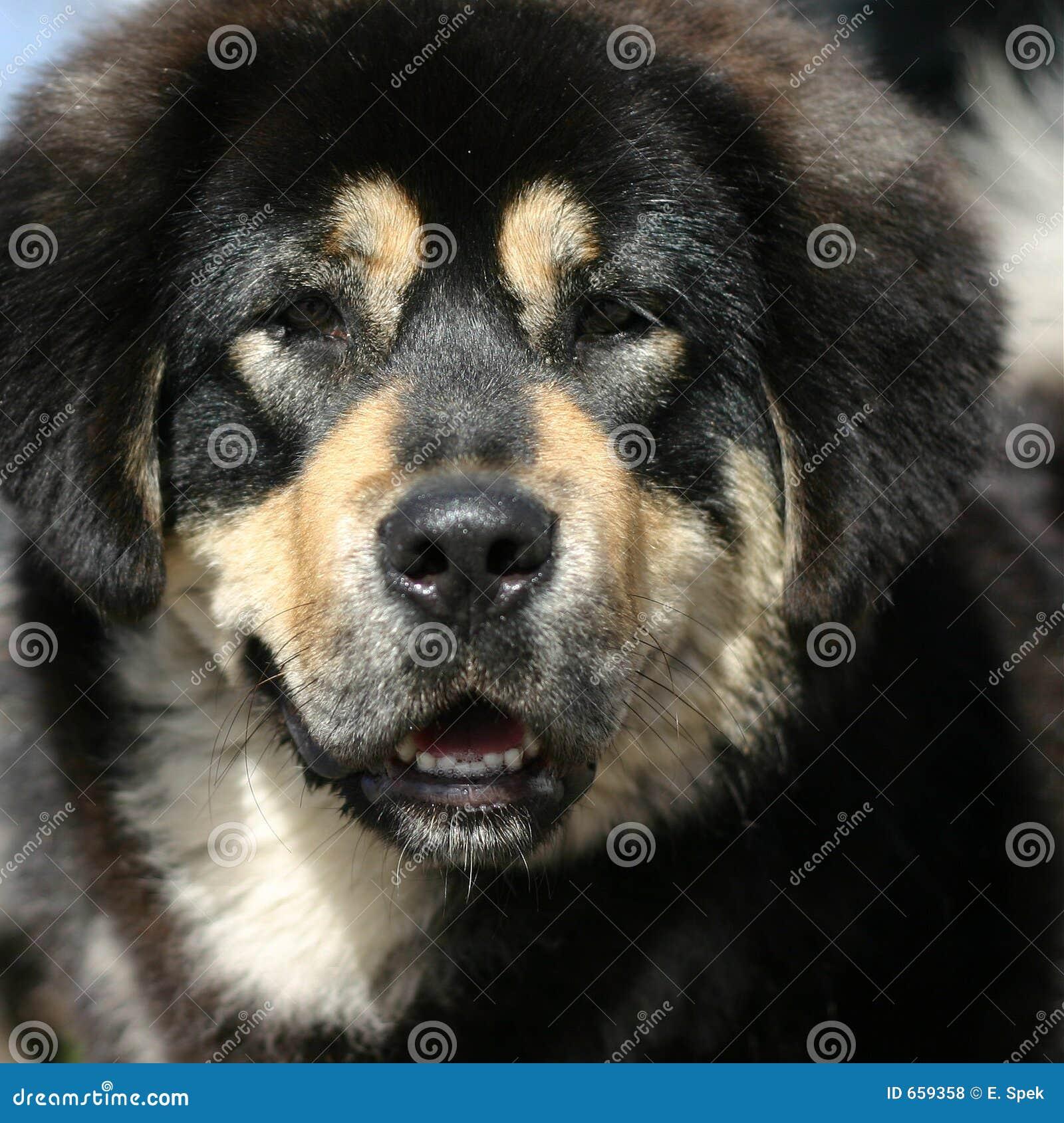 Het portret van de hond