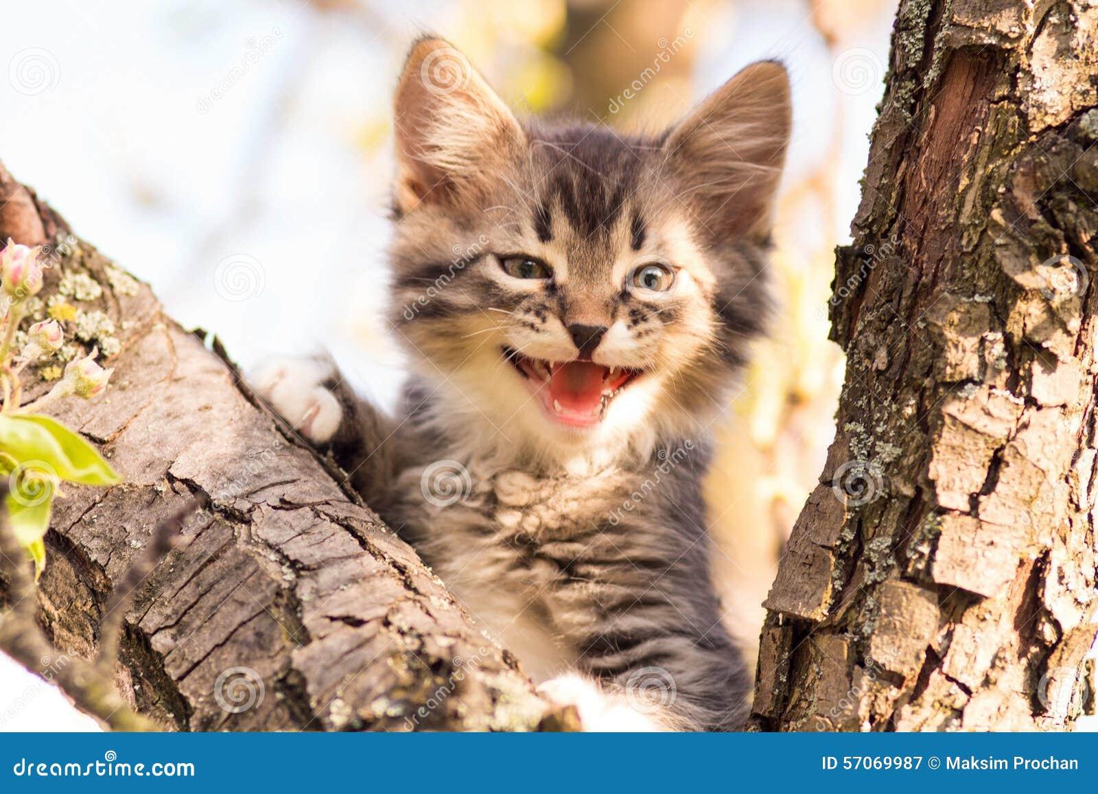Het portret van mooi weinig katje mauwt in aard