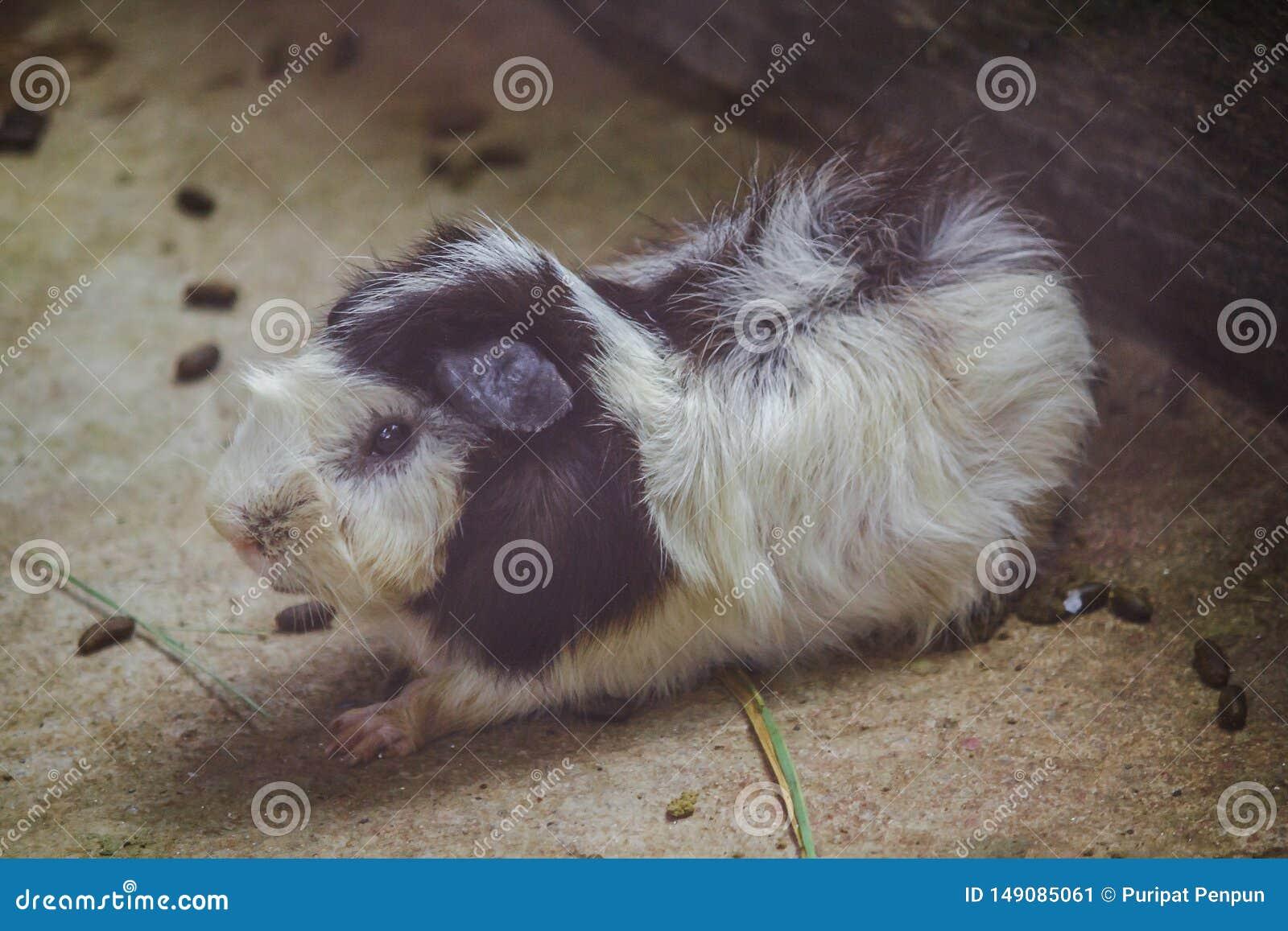 Het proefkonijn is een zoogdier van cuteness