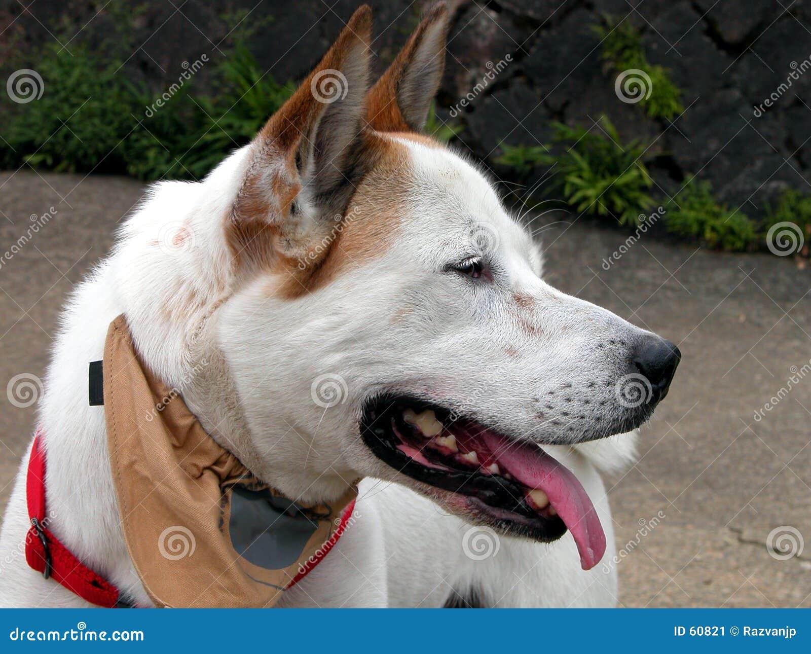 Het profiel van de hond
