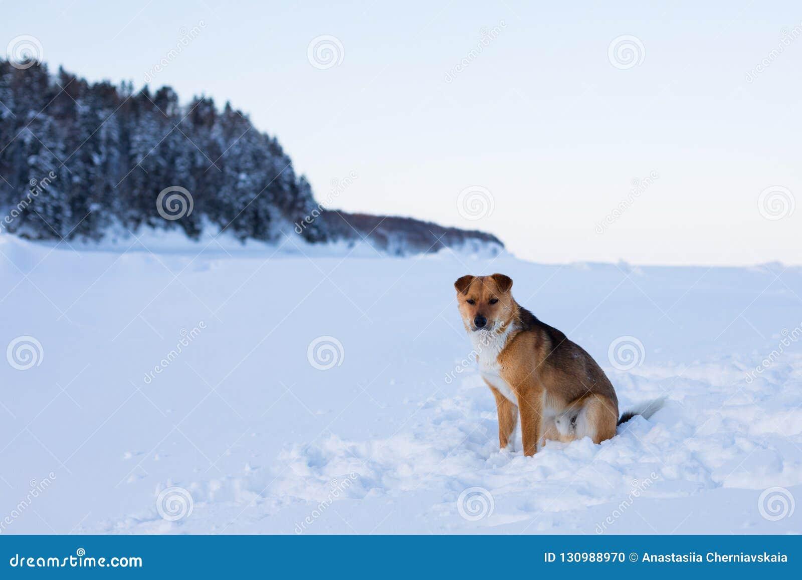 Het profielportret van mooie rode niet rasechte hond is op de sneeuw en de bosachtergrond