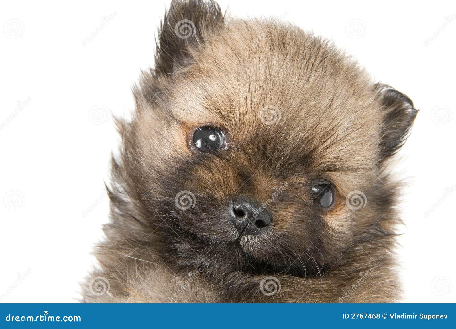 Het puppy