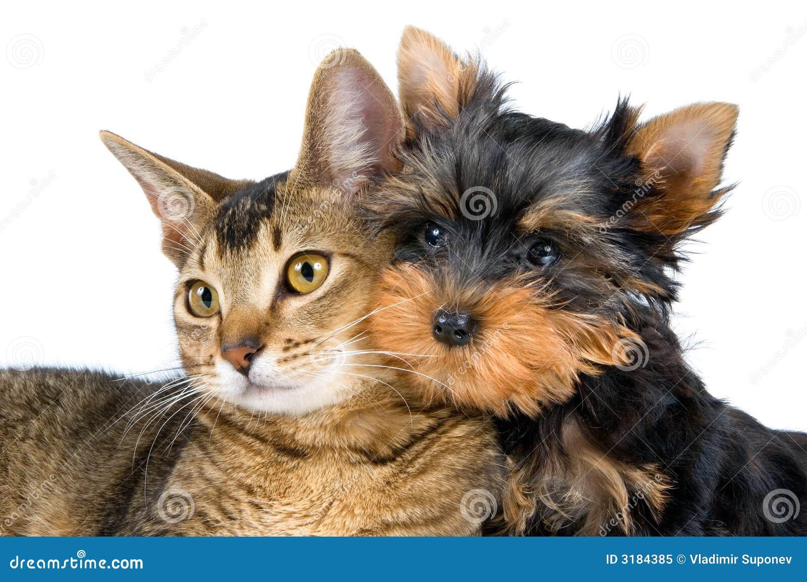 Het puppy en het katje