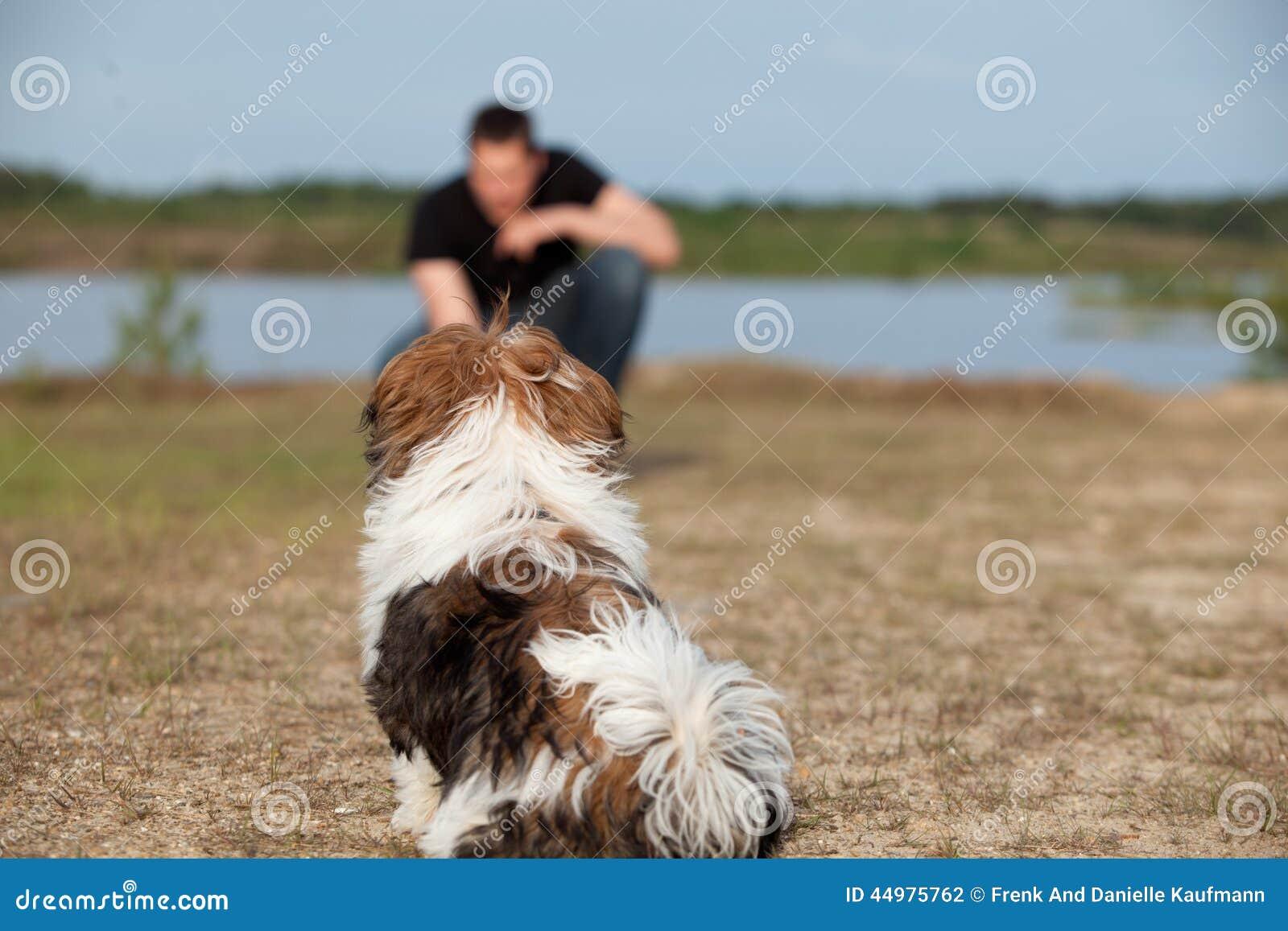 Het puppy krijgt gehoorzaamheid opleiding