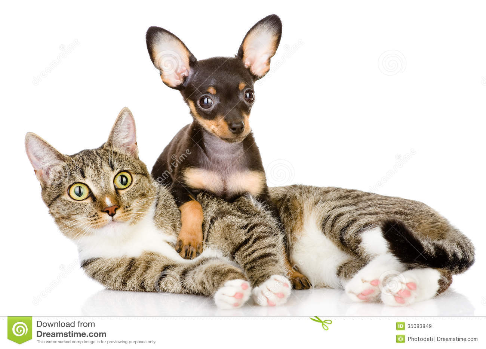 Het puppy ligt op een gestreepte cat.looking bij camera.