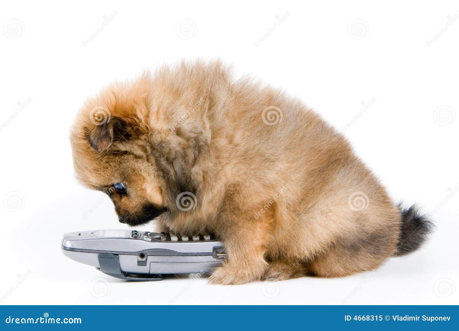 Het puppy met telefoon