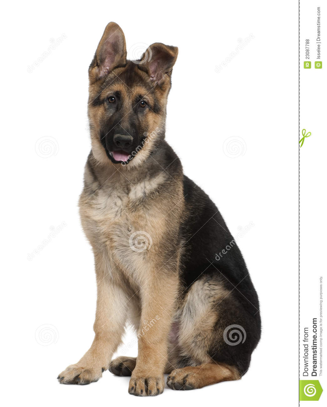 how to train a 3 month old german shepherd puppy