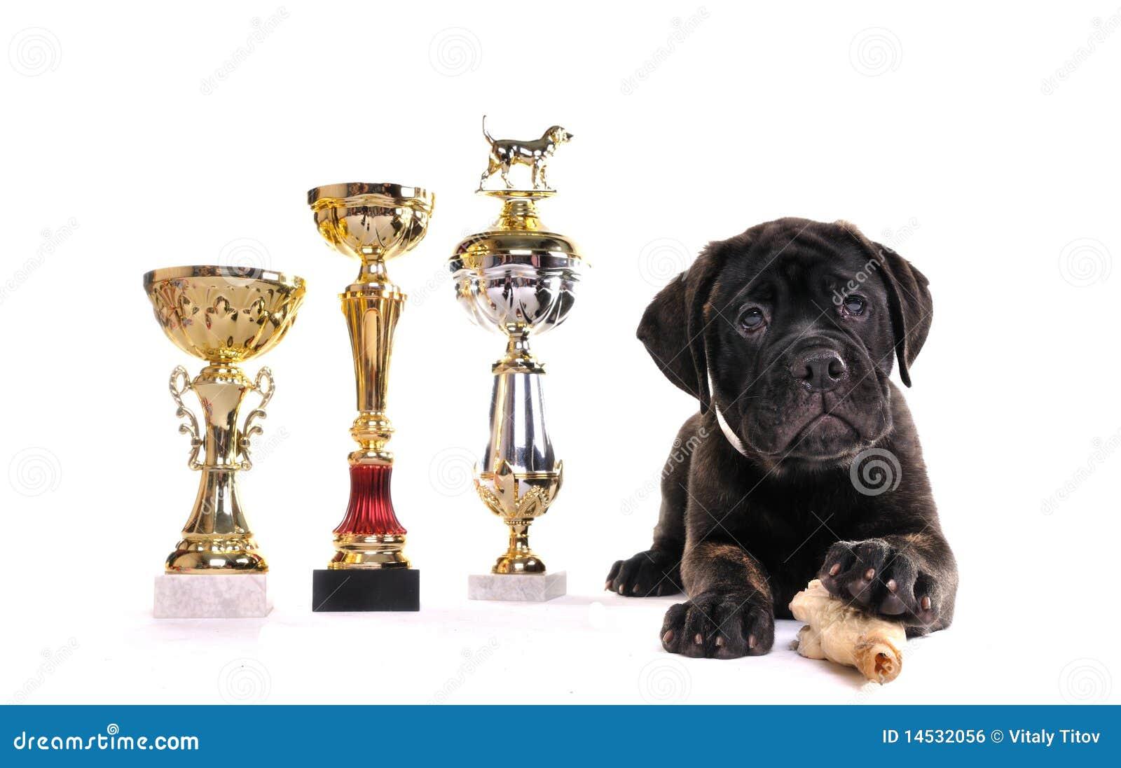 Het Puppy van de kampioen