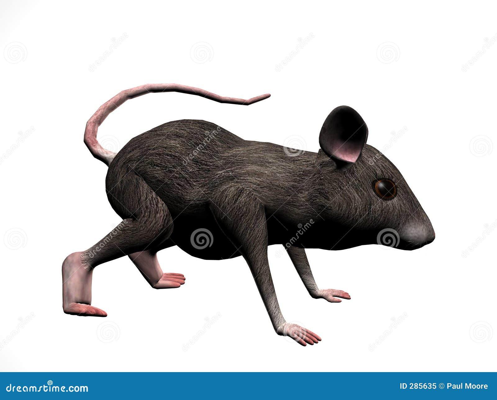 Het Recht van de muis