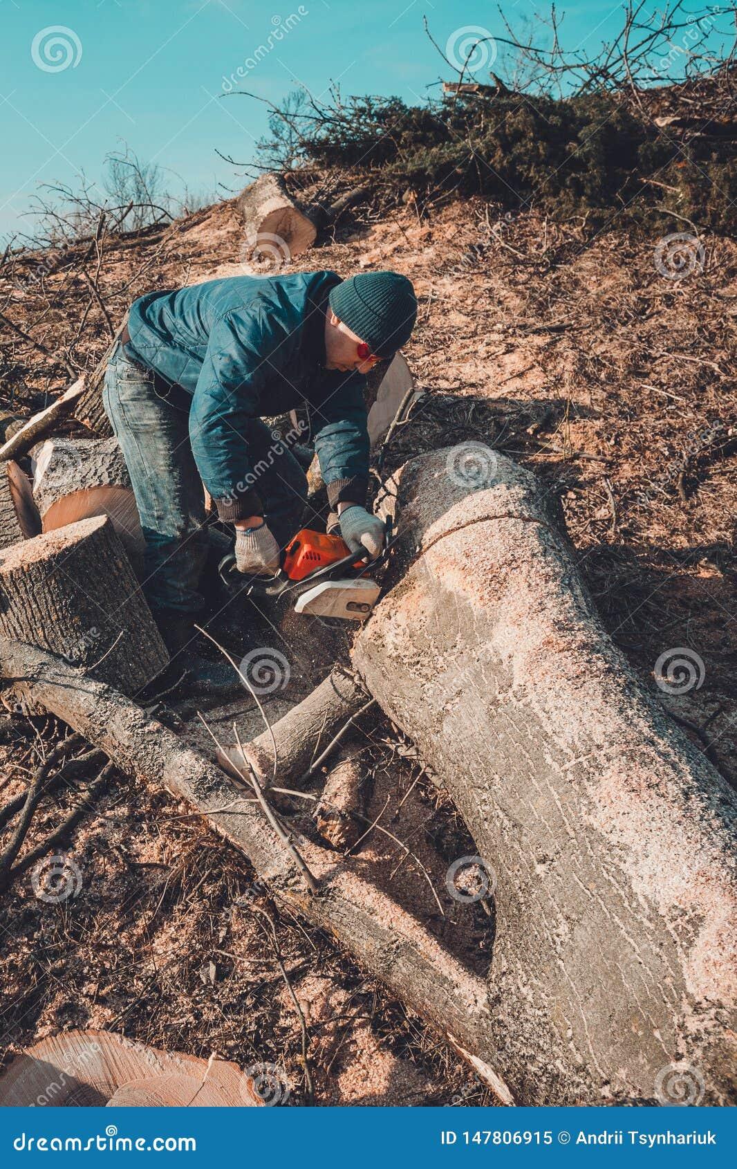 Het registreerapparaat sneed de boom van as van kettingzaag aan het hout, en treft voor de de winterperiode voorbereidingen