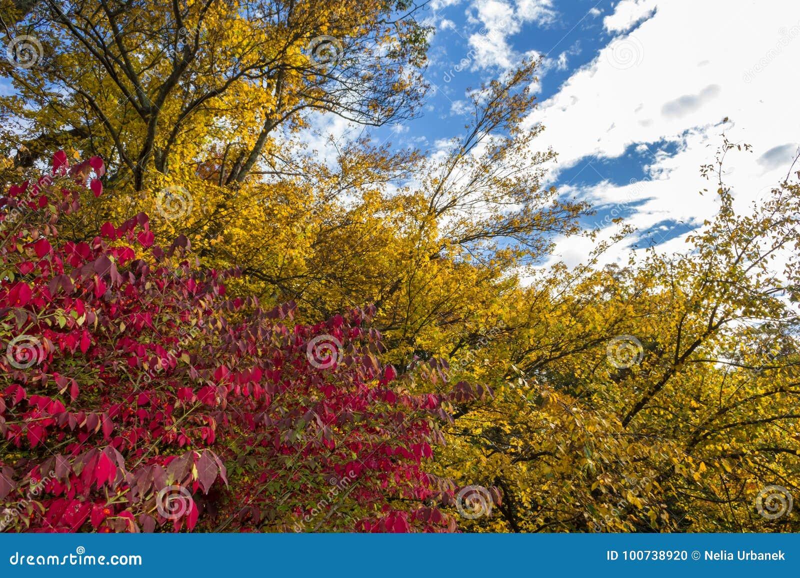 Het rode en Gele dalingsgebladerte vertakt zich agains een blauwe hemel