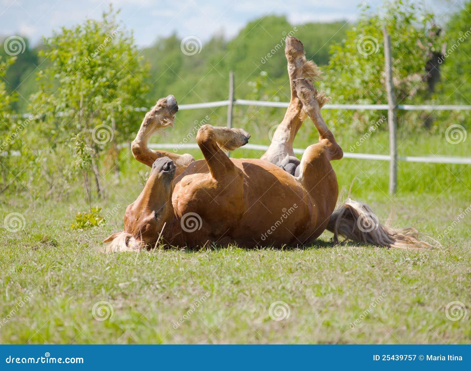 Het rollen van het paard