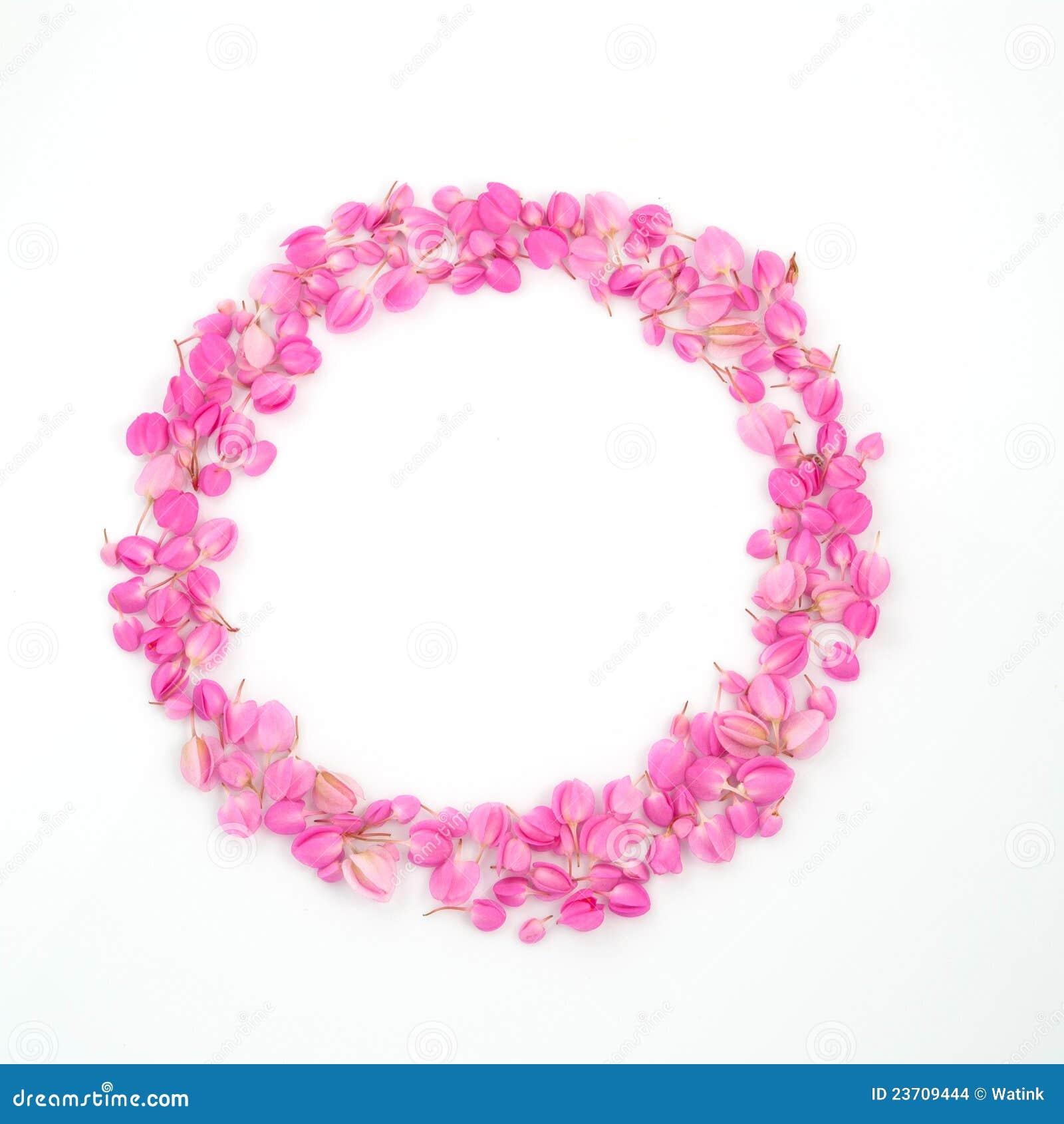 ПИОН  gardeniaru