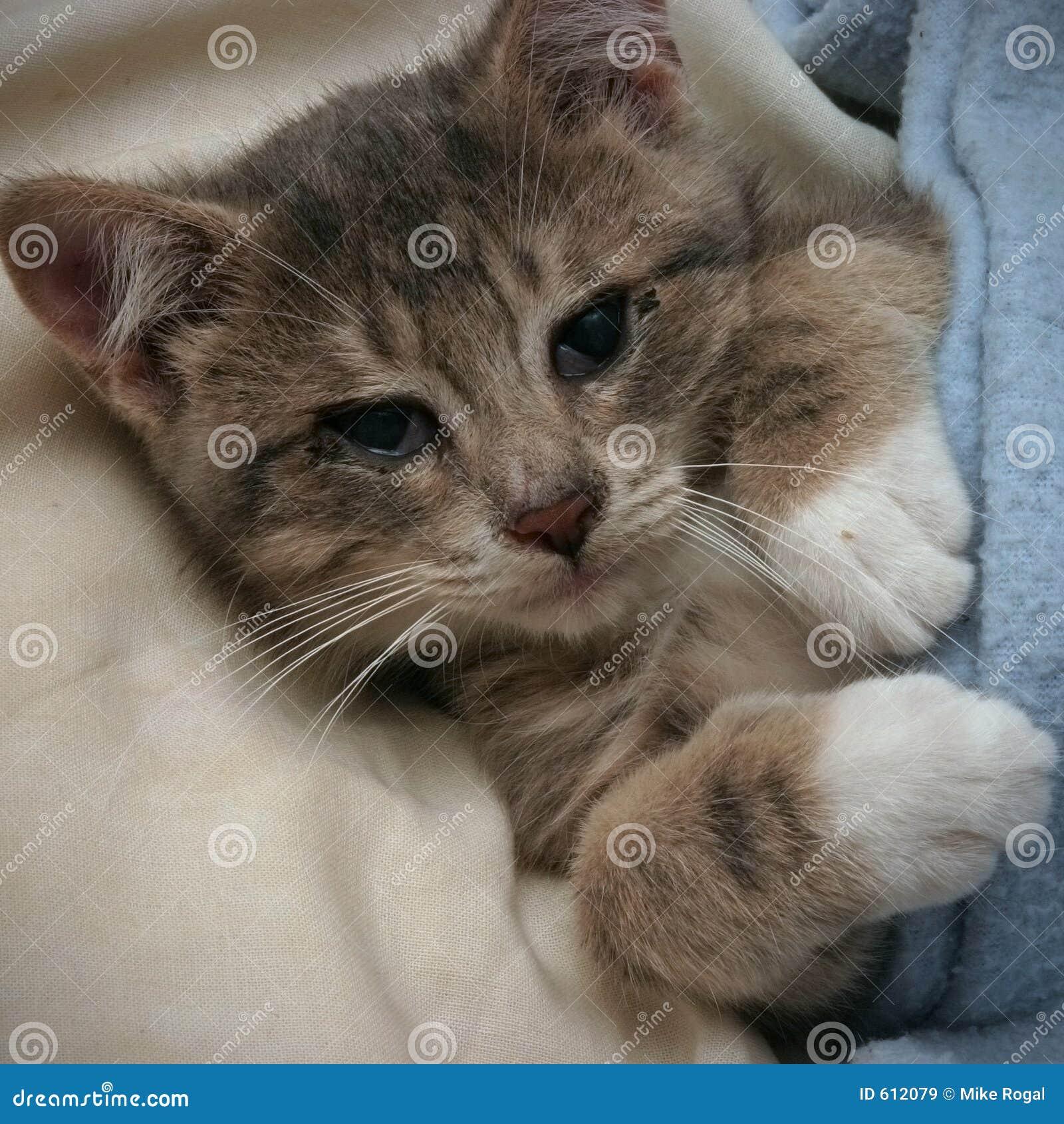 Het rusten van het katje