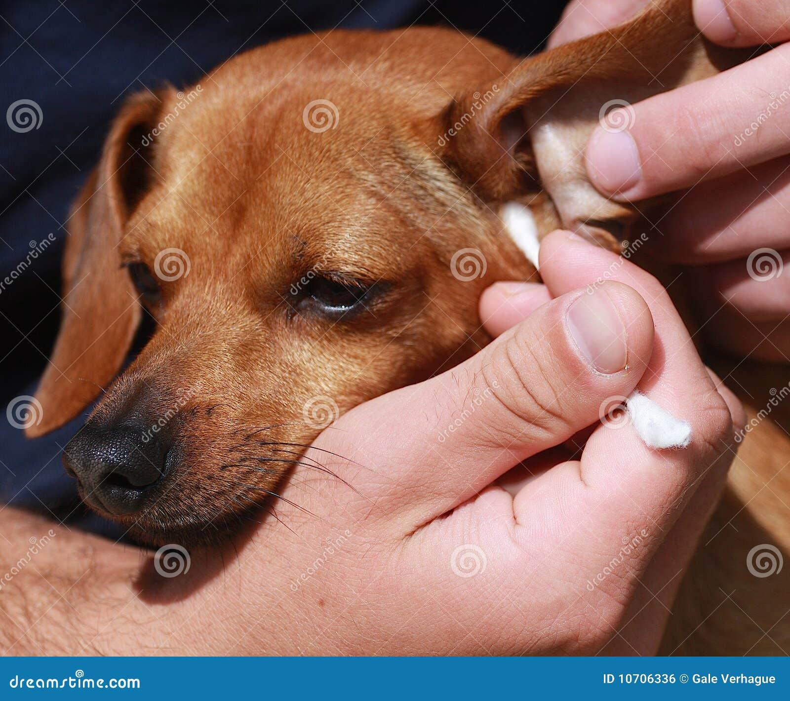 oren van hond schoonmaken